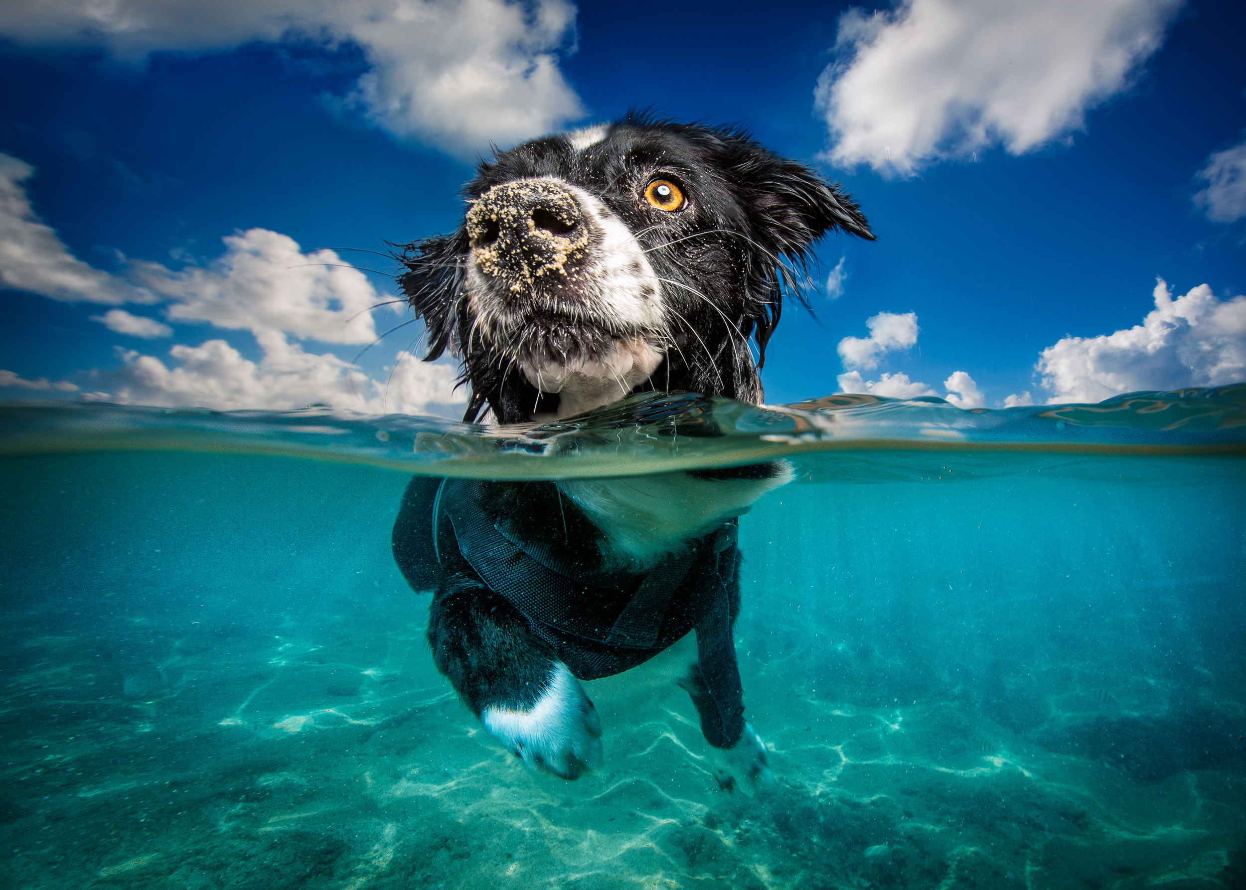 underwater-dog-photographer.jpg