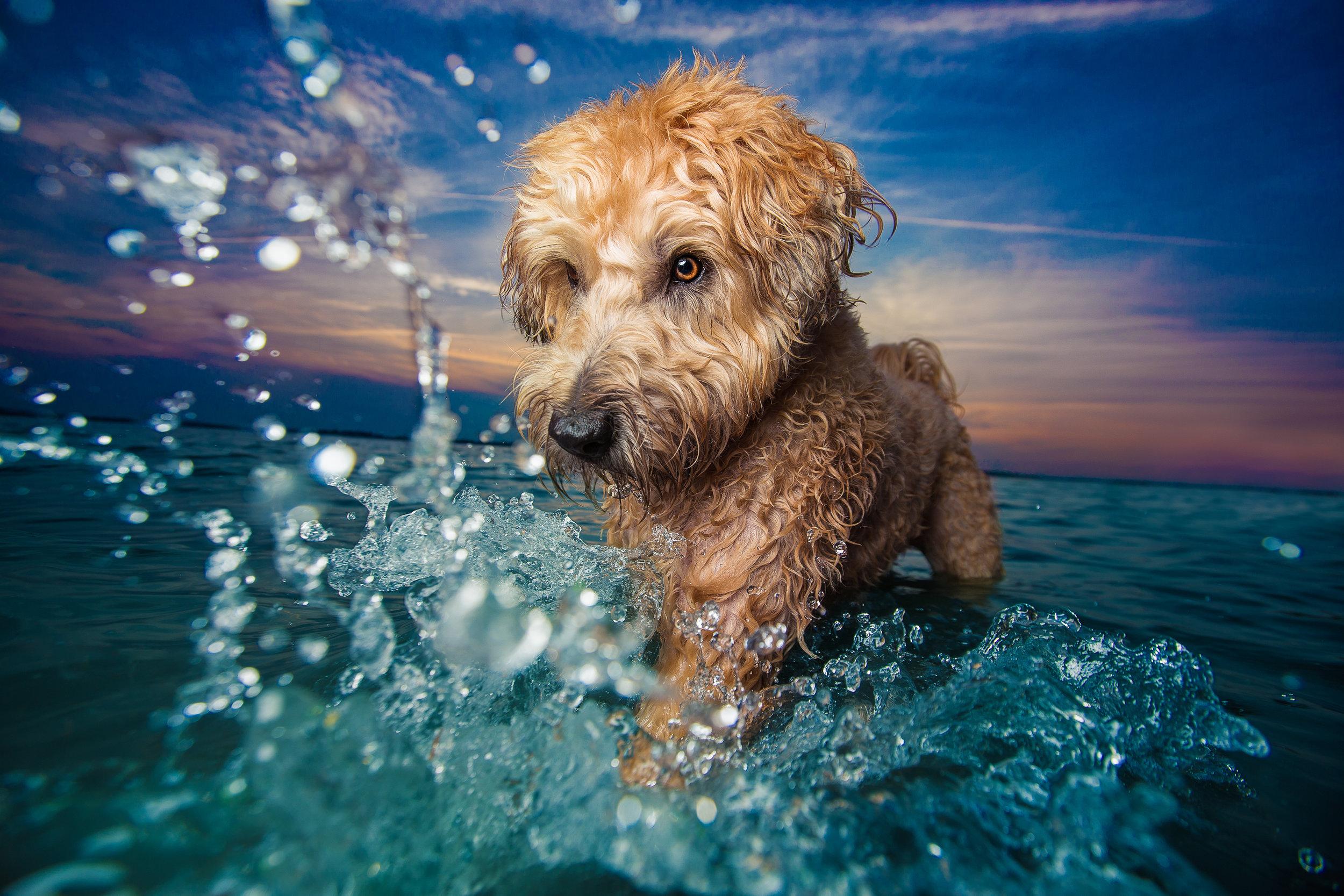 dogbreathphotography.jpg