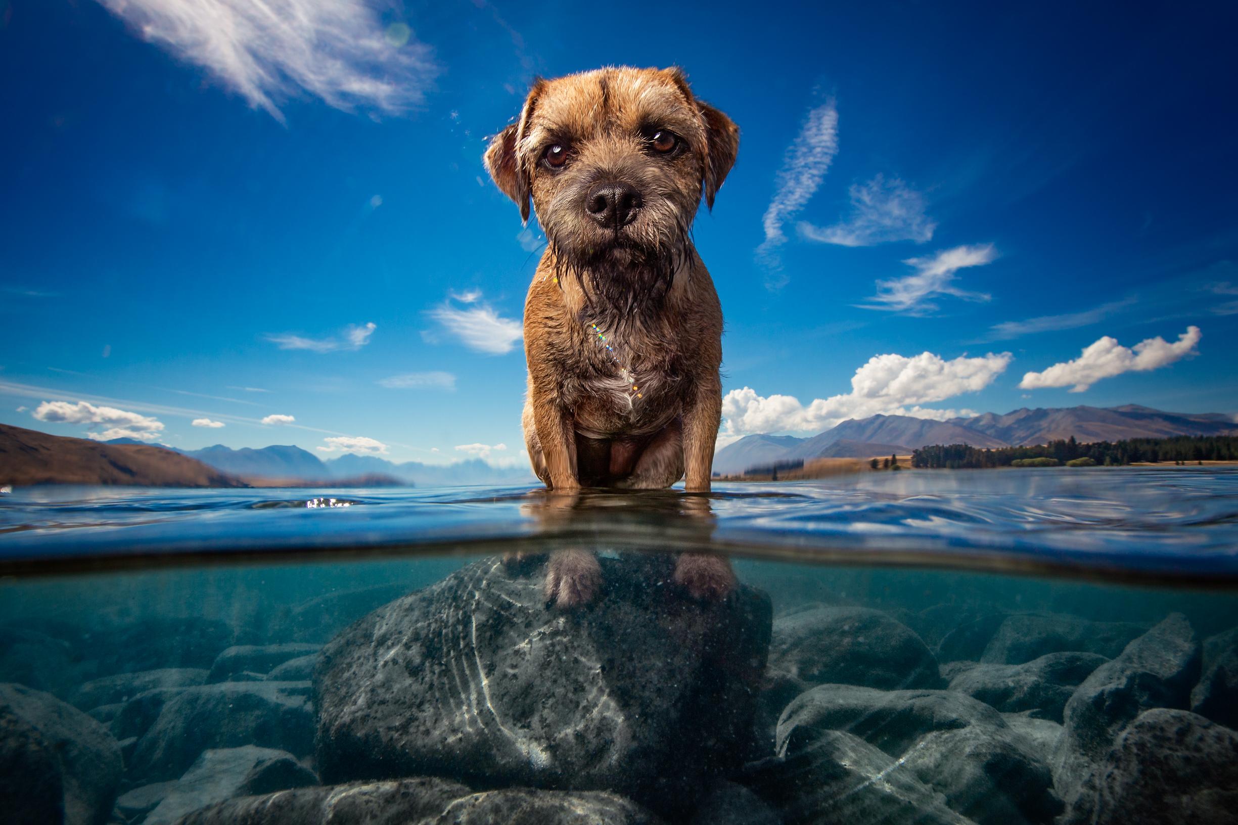 underwater_dog.jpg