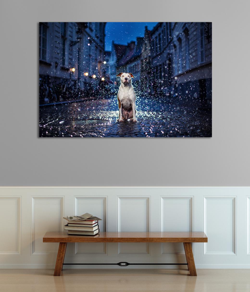 bobby-rain-on-wall.jpg