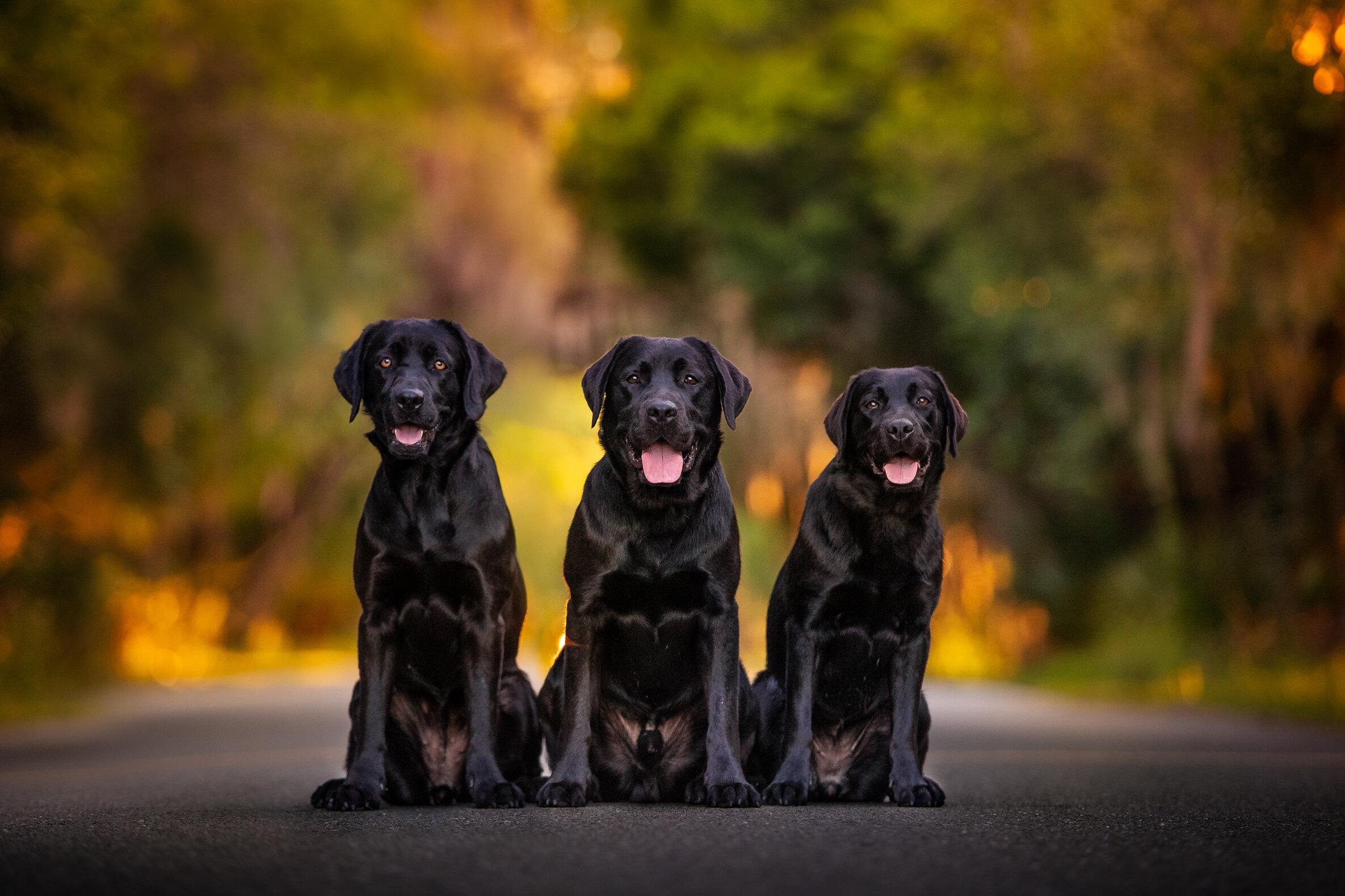 guide_Dogs.jpg