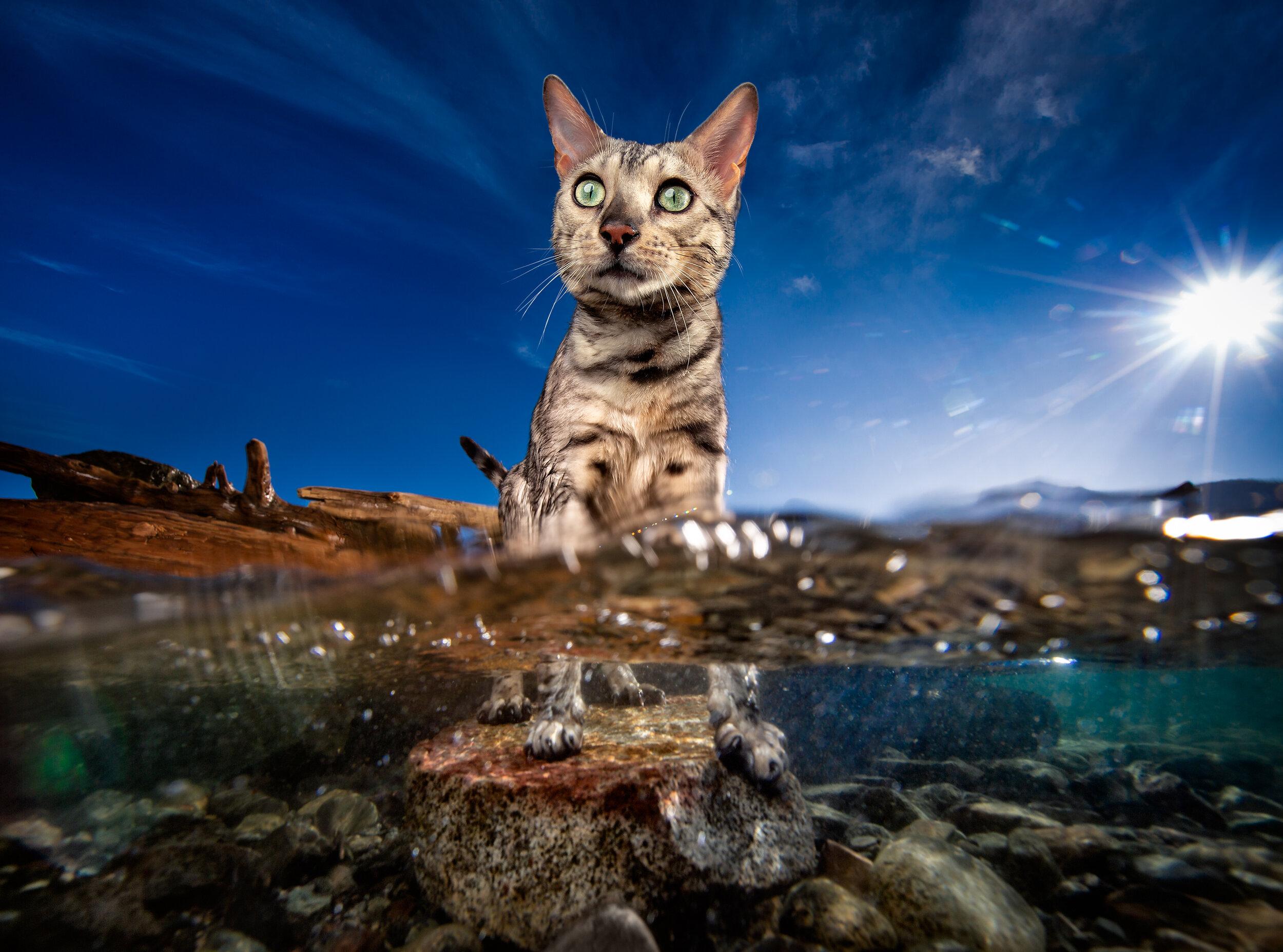 cat_underwater.jpg