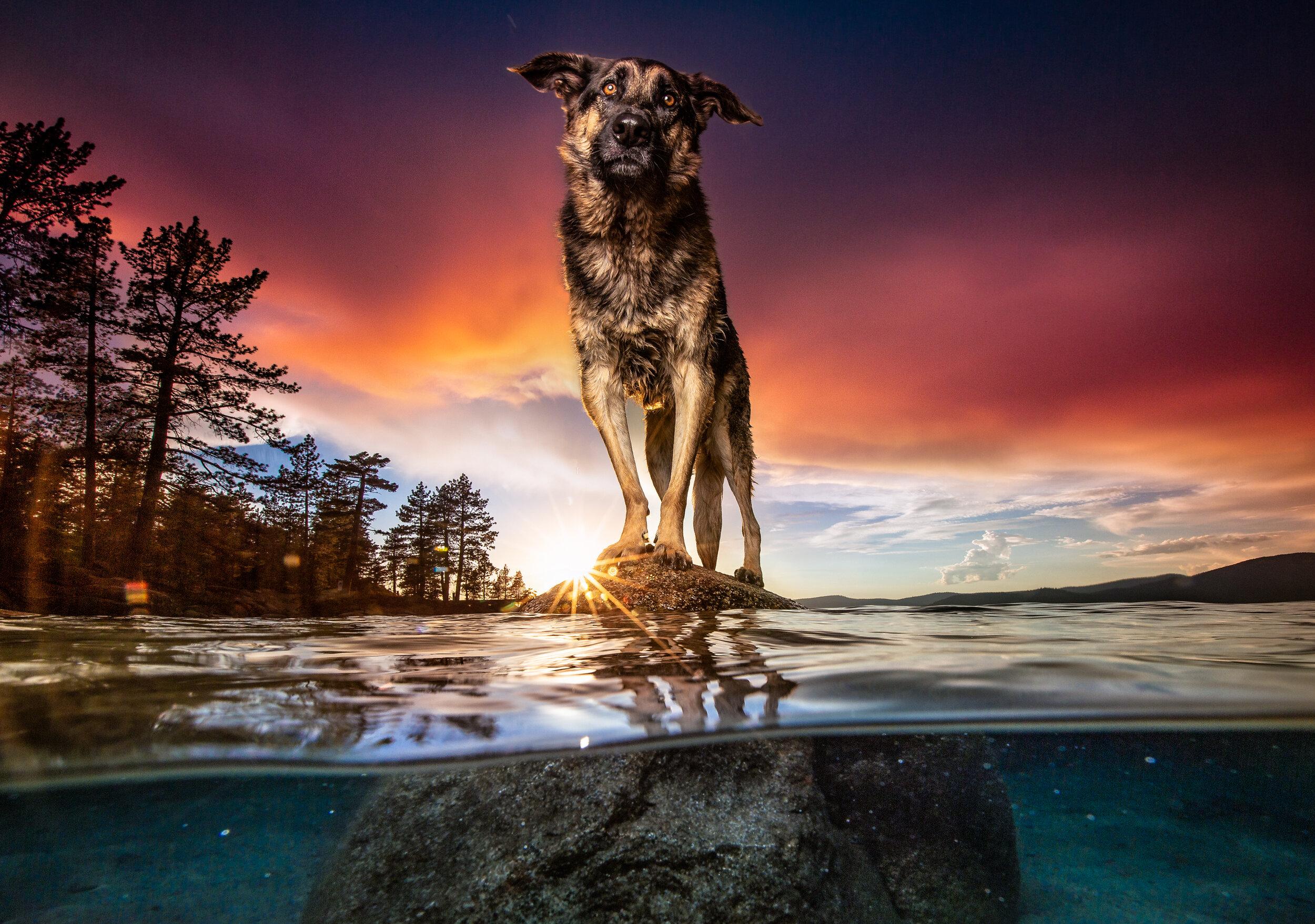 Dog Breath Photography Boston Dog Photographer