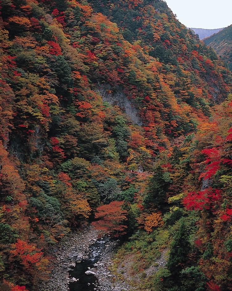 Hösten är mycket vacker i de japanska bergen!