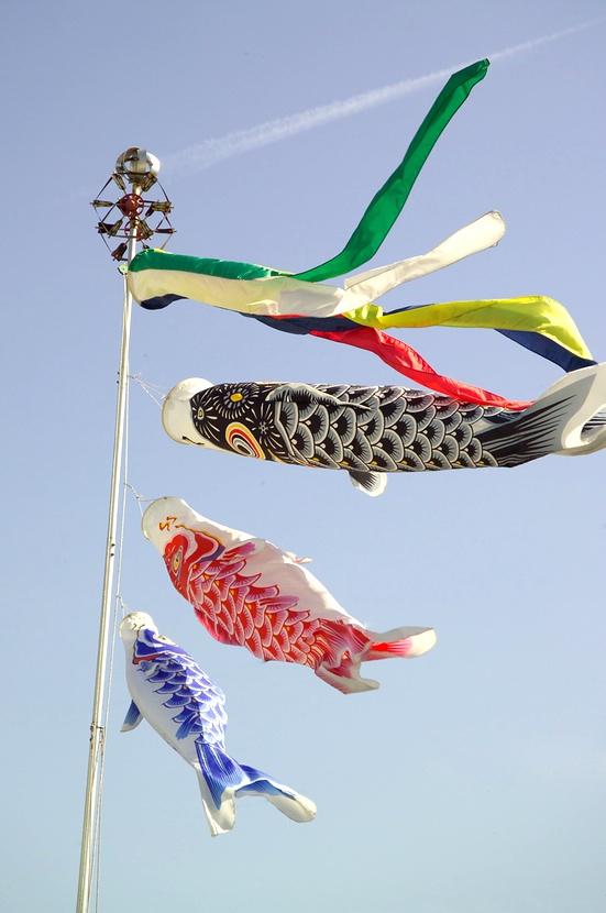 Dessa karp-drakar symboliserar pappa längst upp, sedan kommer mamma och längst ned den eller de söner huset har.  Foto: Wikimedia Commons
