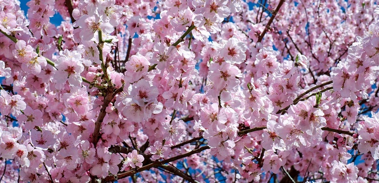Våren är en härlig tid i Japan - vackert så det förslår.