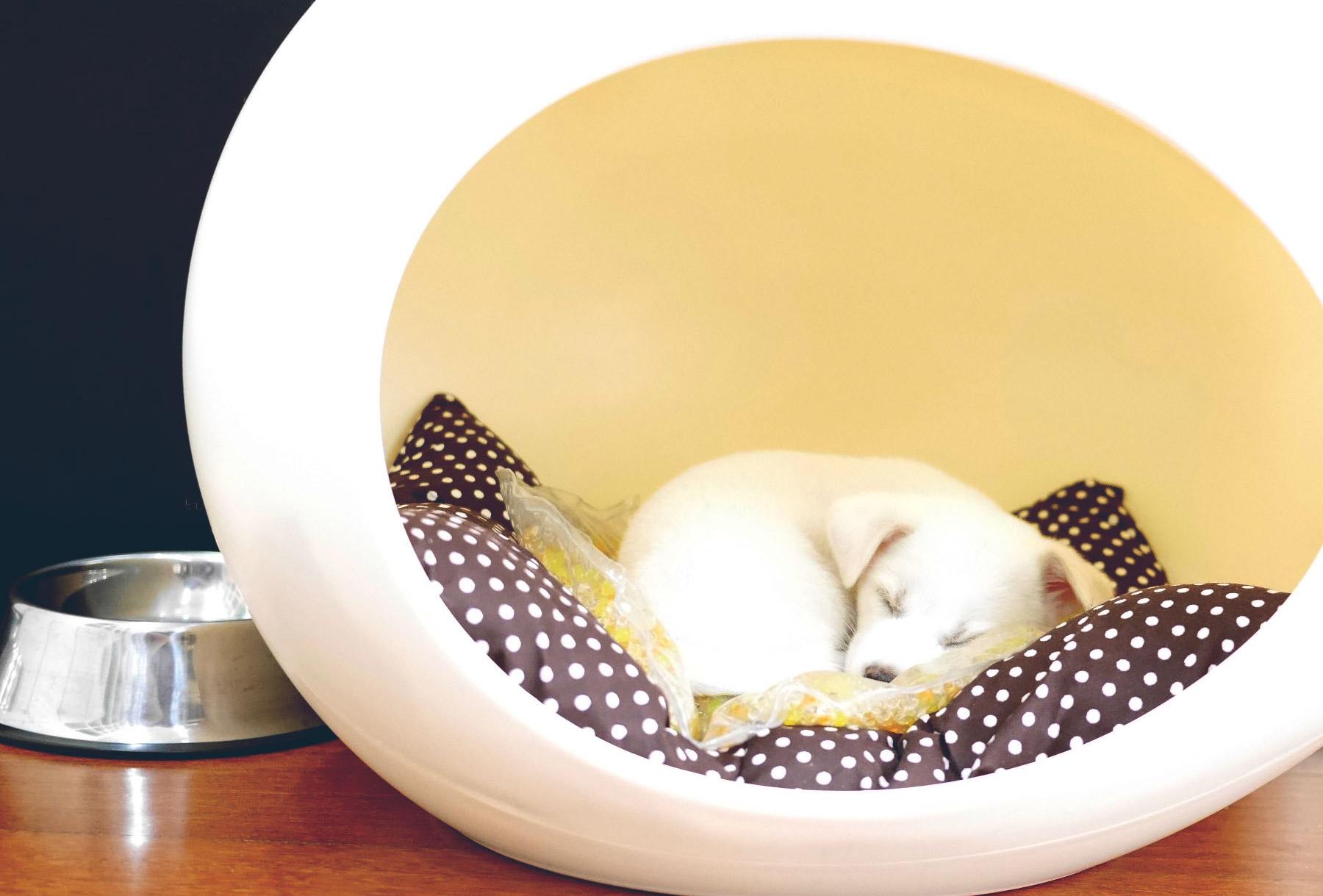 pet-egg-house-logo-design-02