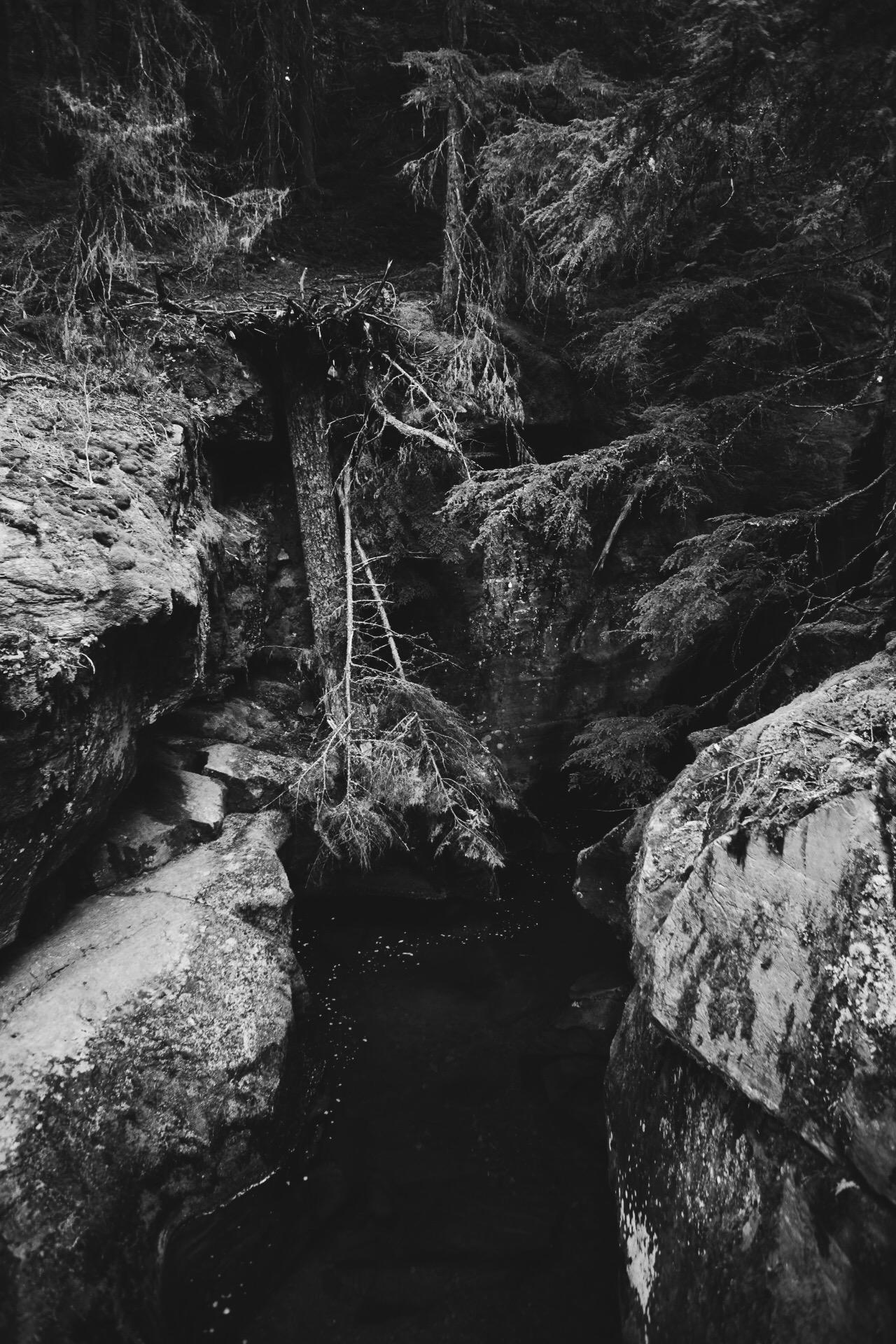 riversforest.jpg