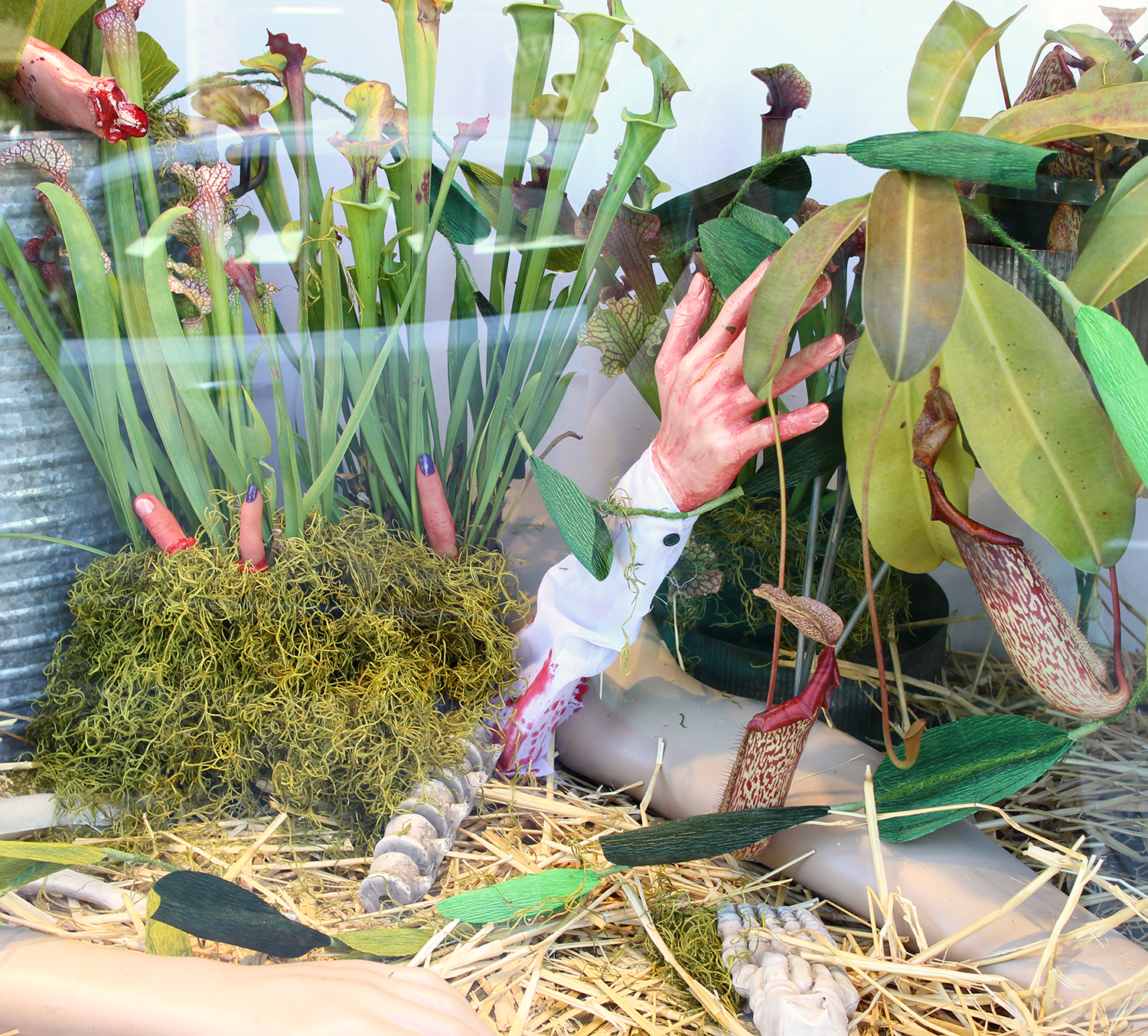The carnivorous plants were provided by  Predatory Plants.