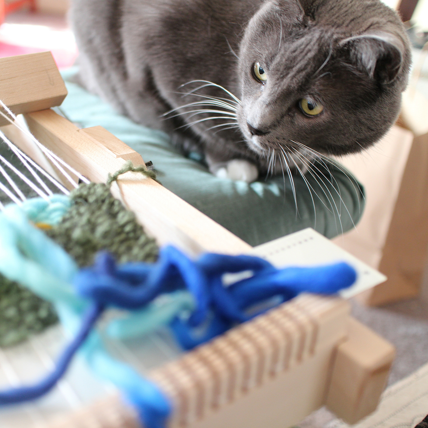My cat helping with the weaving process.