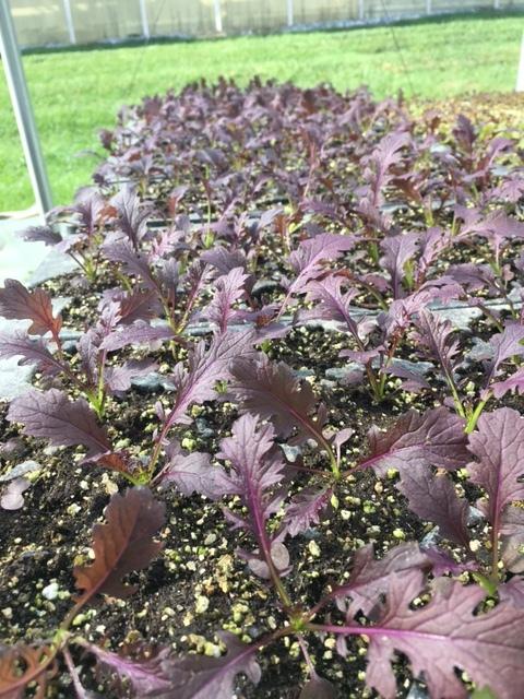 More leafy greens