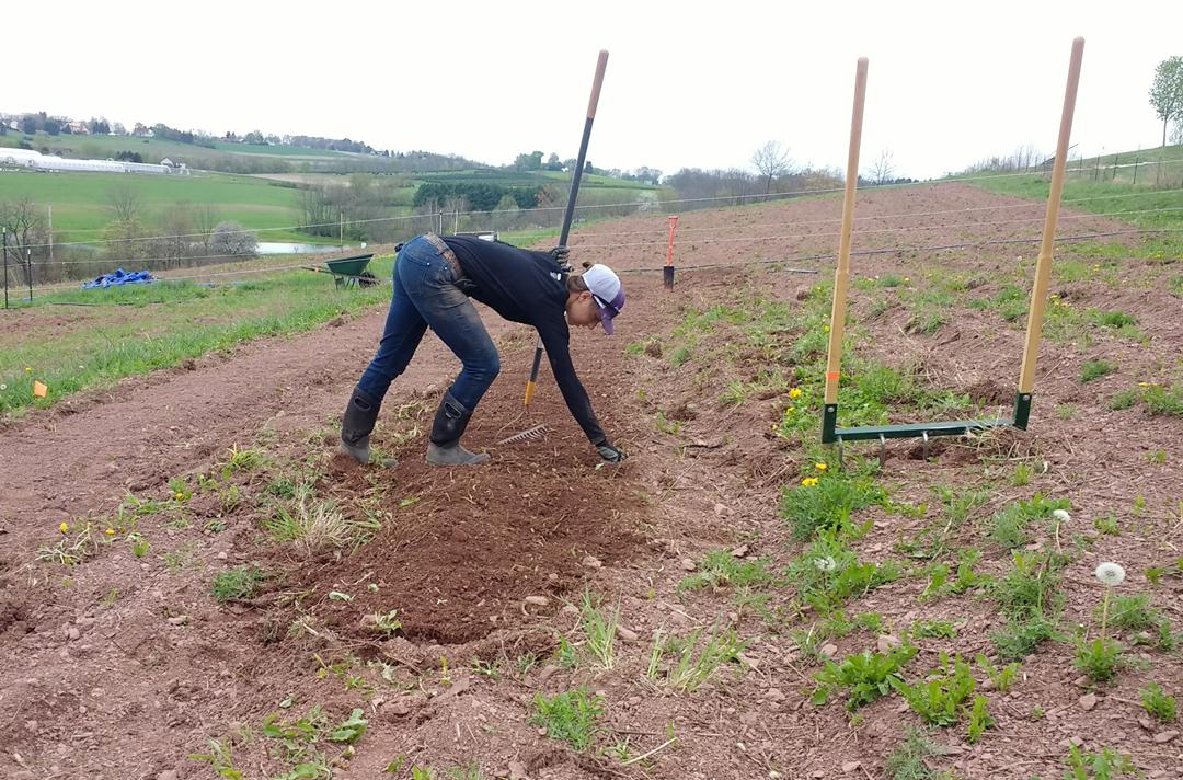 Broadforking and raking