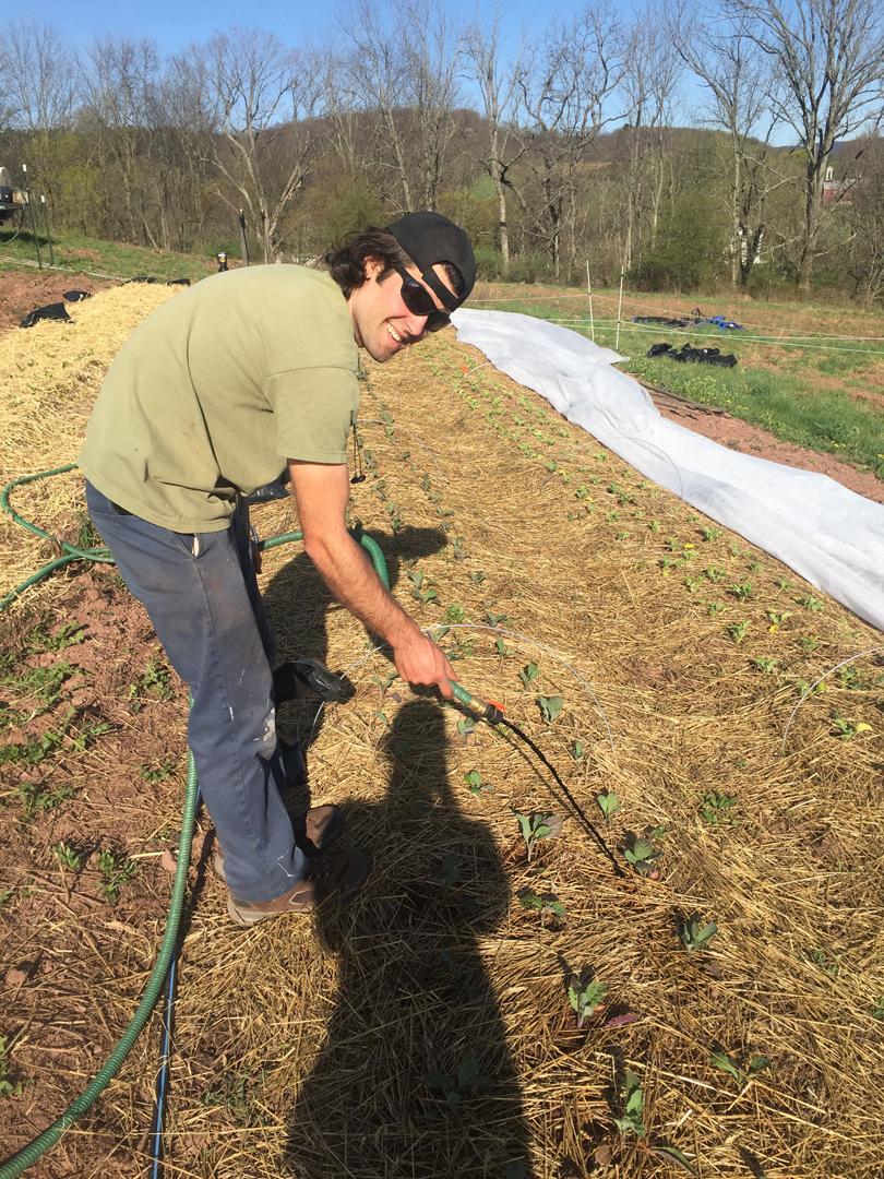 Organic fertilizing
