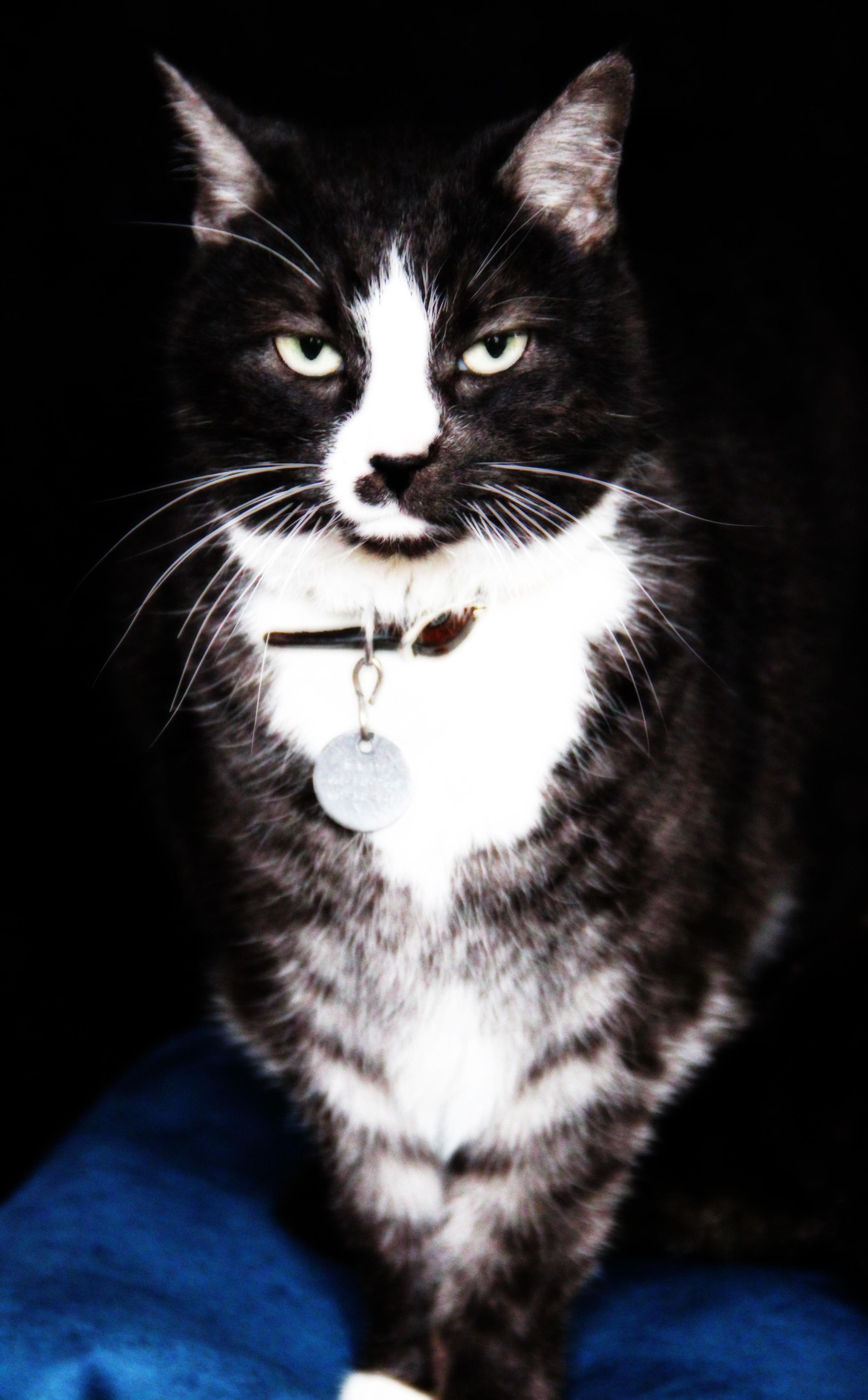Minnie had professional portrait.jpg