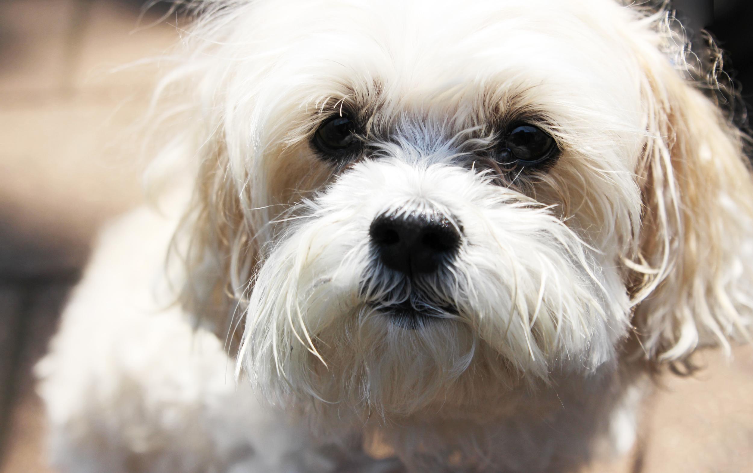 Beauty is Canine.jpg