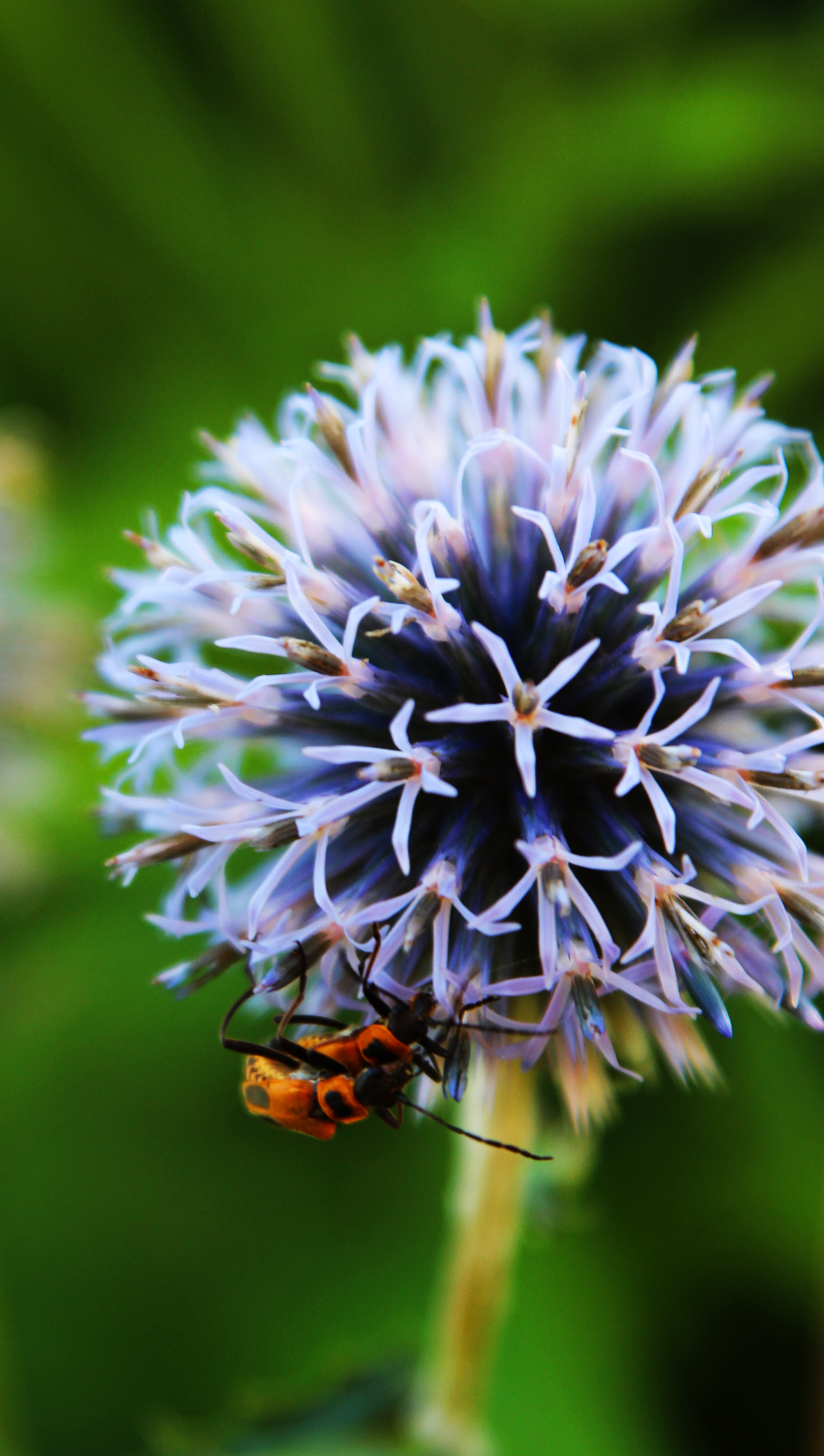 thistle and bugs.jpg