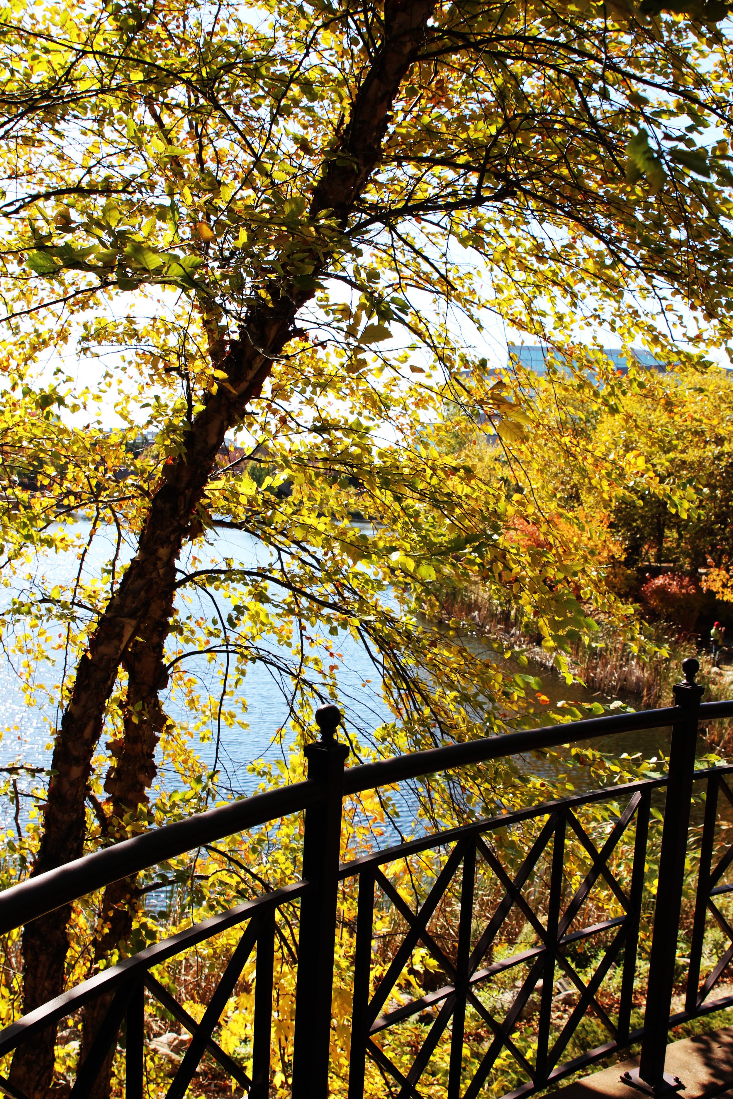 Centennial park3.jpg