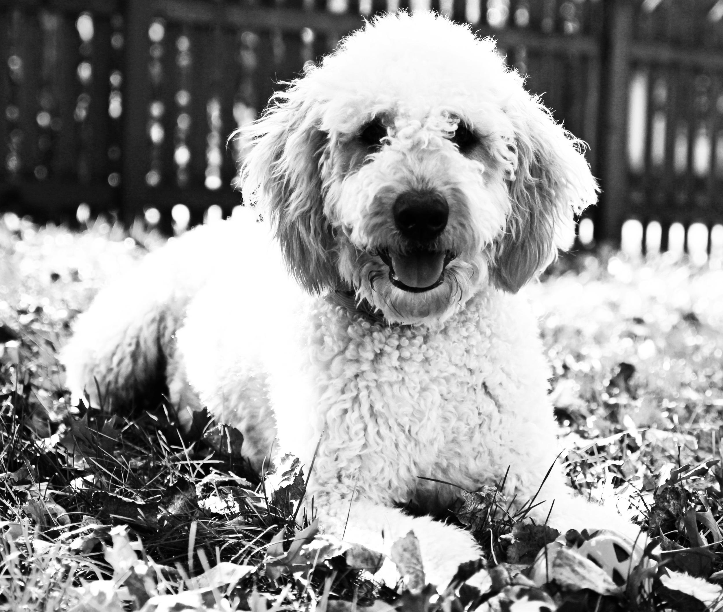 Louie the cute BW.jpg