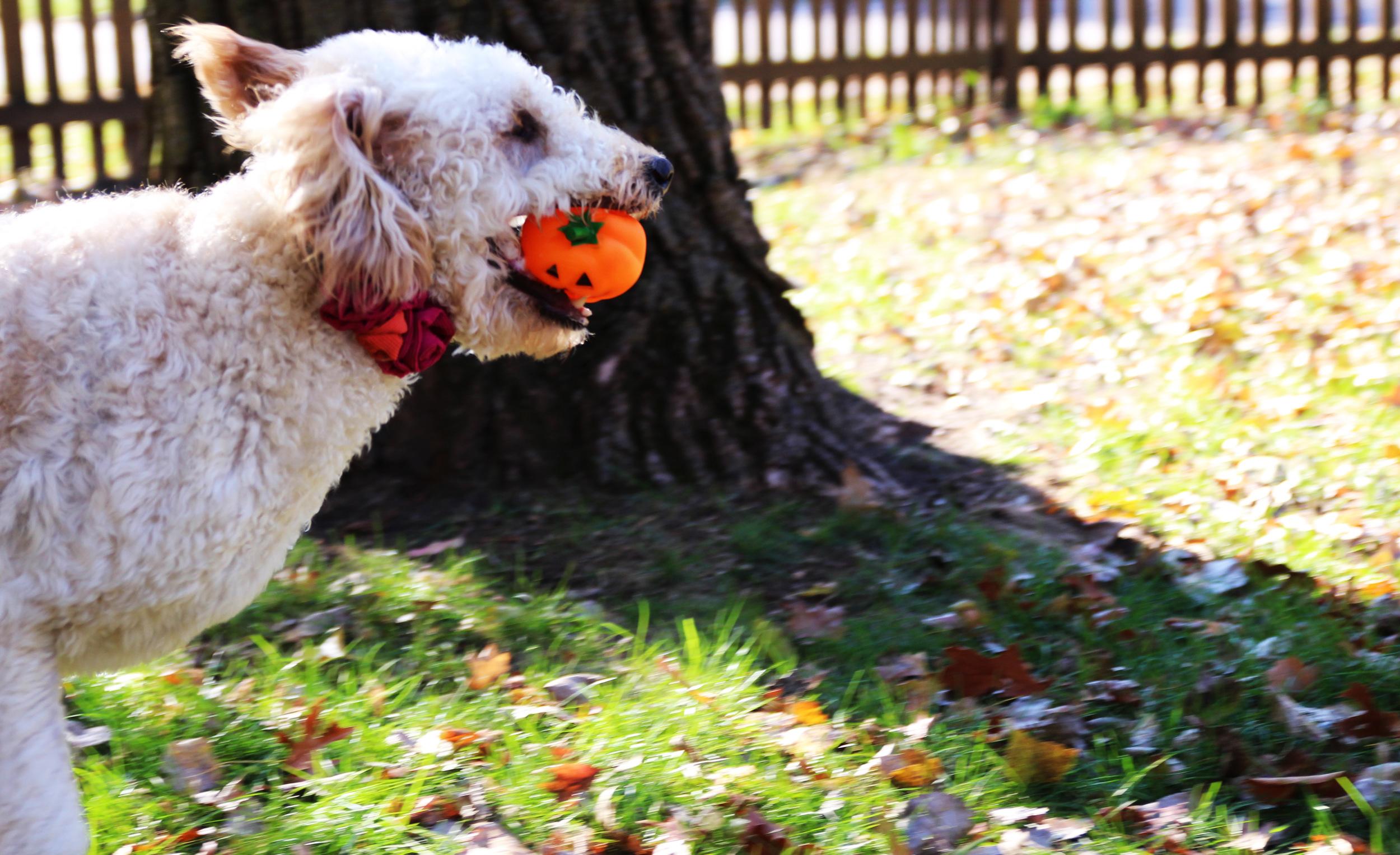 louies new pumpkin2.jpg
