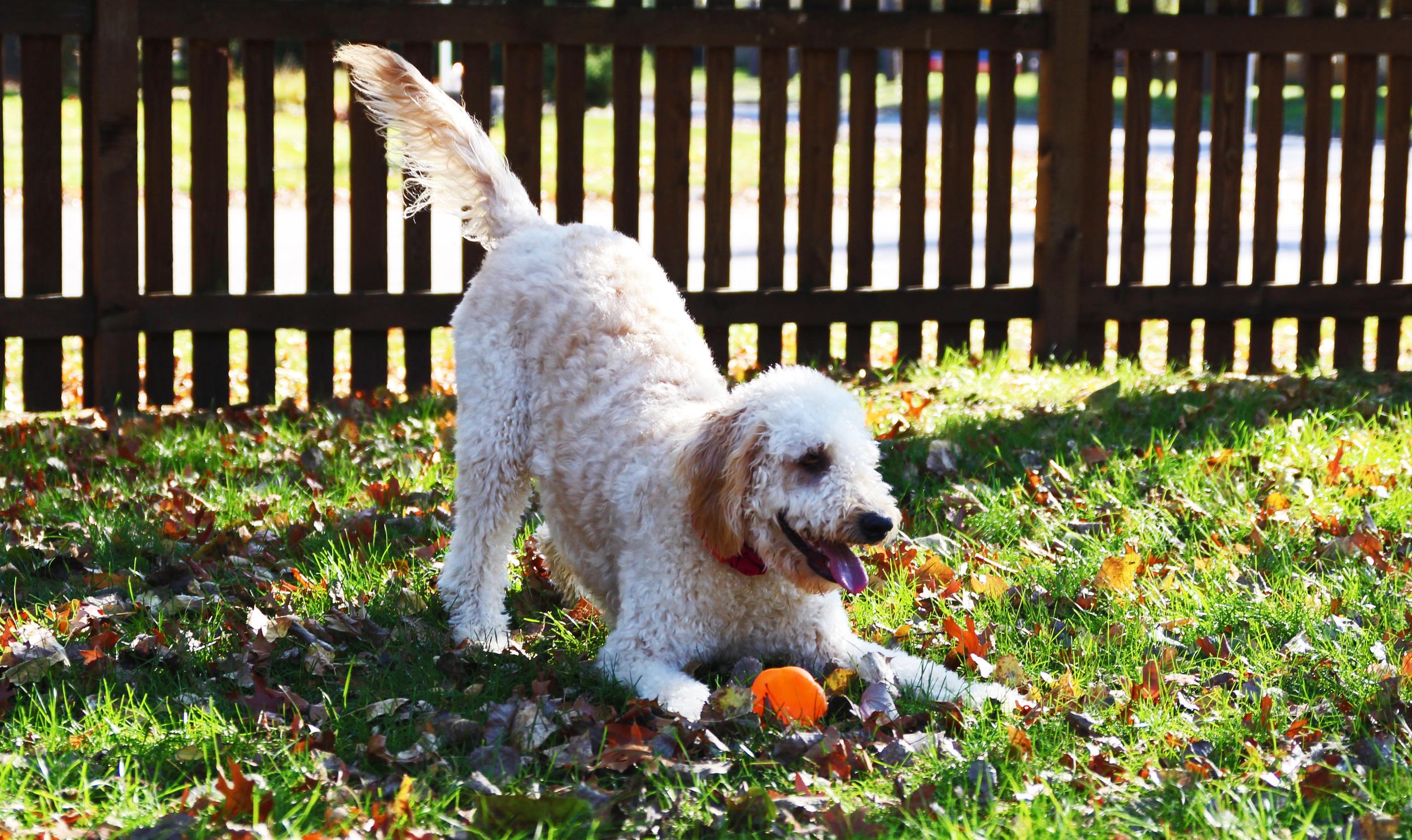 louies new pumpkin3.jpg