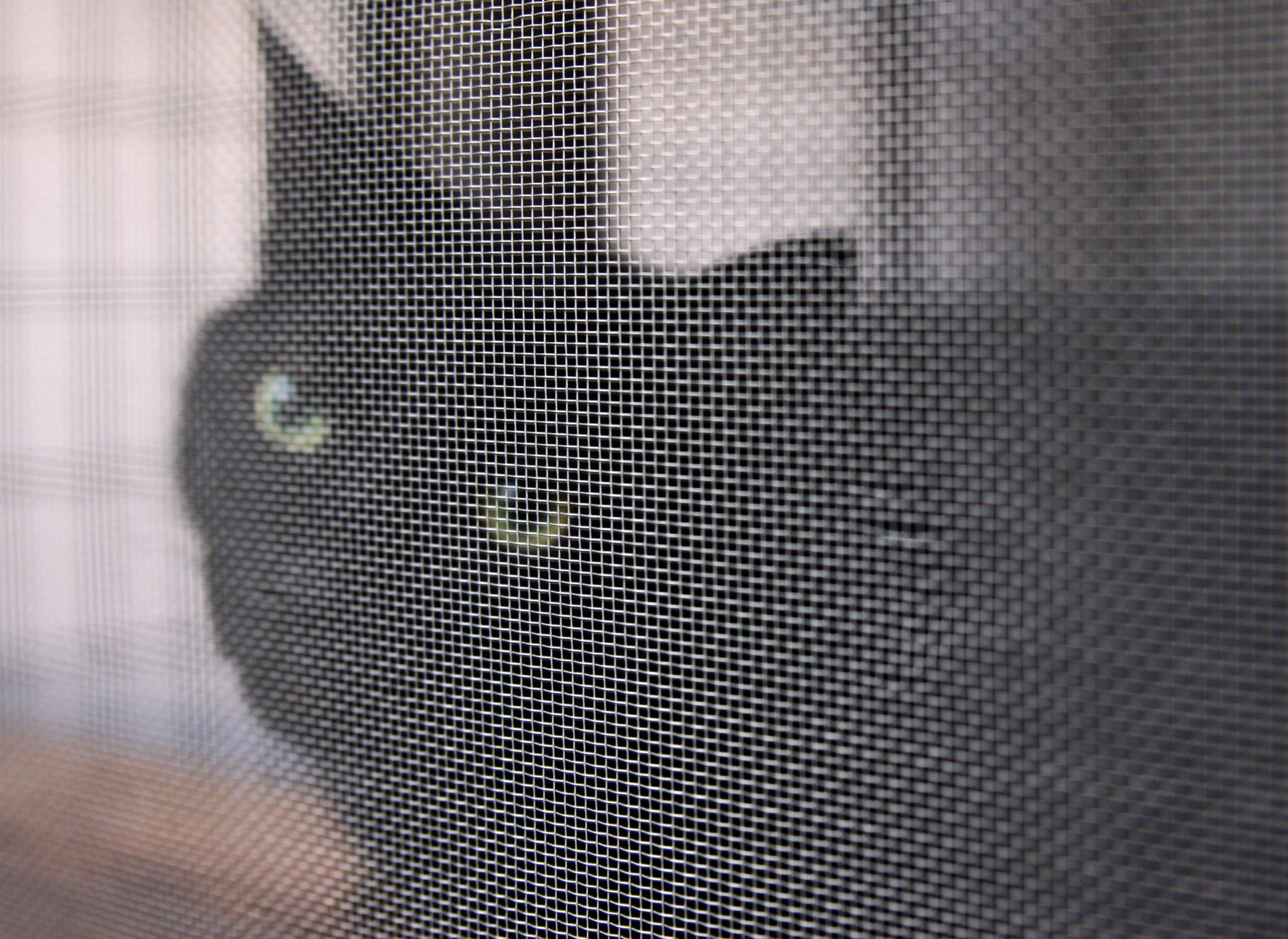 bagheera behind the screen.jpg