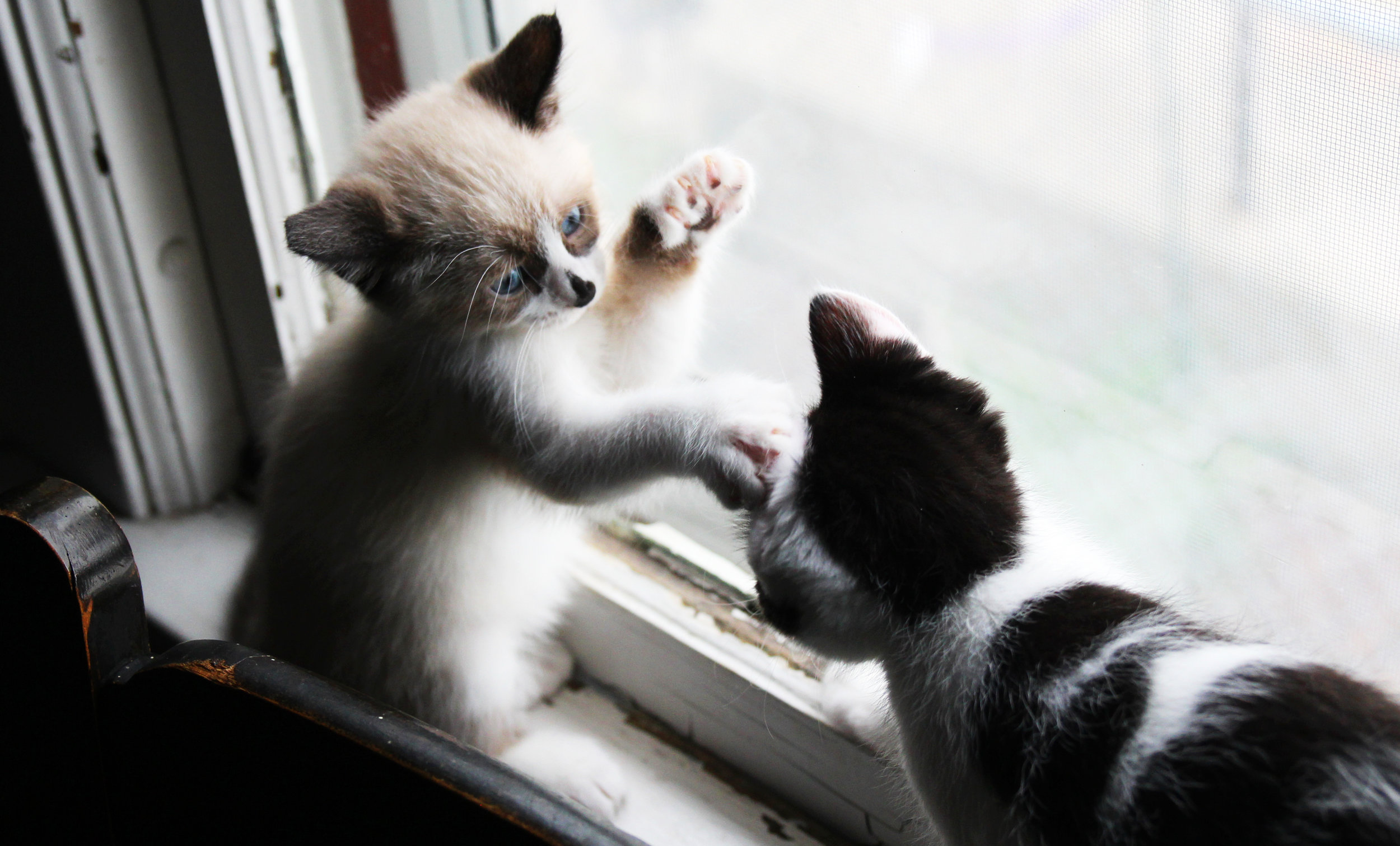 lily and rory kitten play.jpg