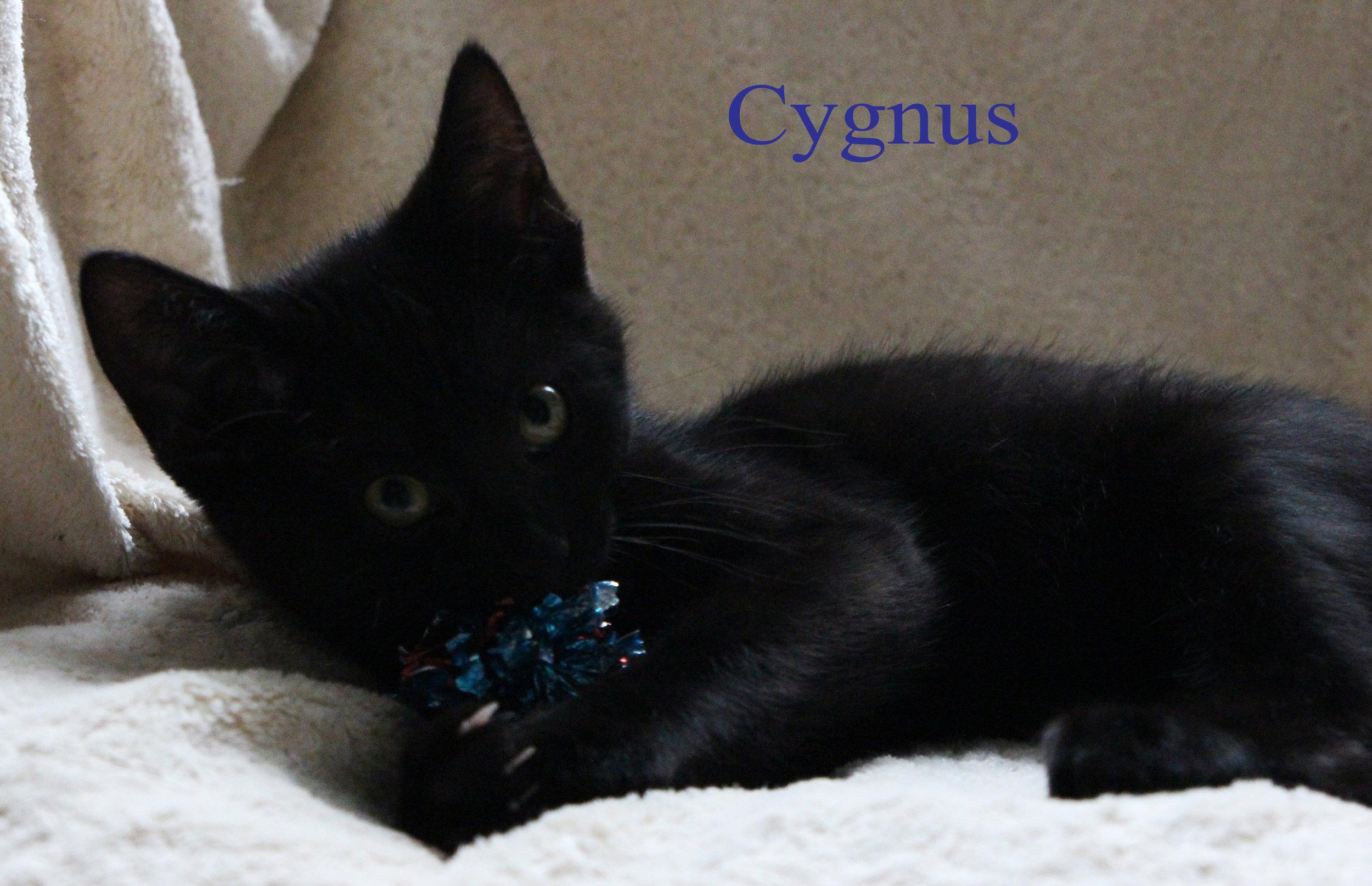 class photo cygnus_edited-2.jpg