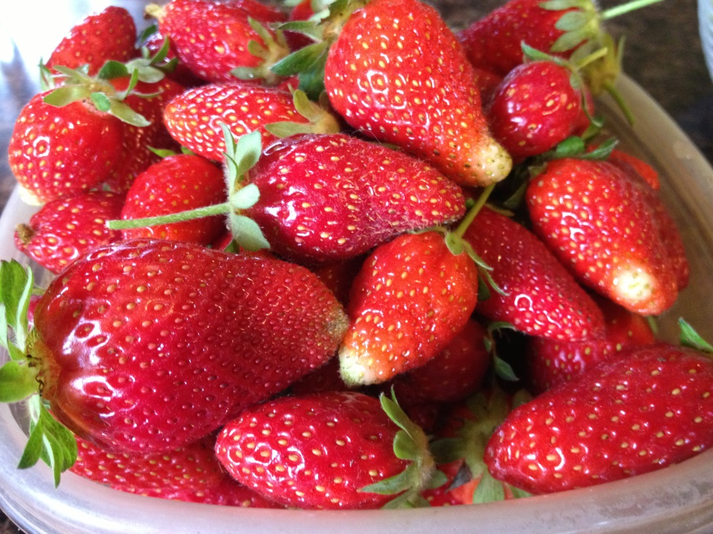 Actually, these are berries from my GARDEN, while it was still producing earlier this year! Can you believe it?!