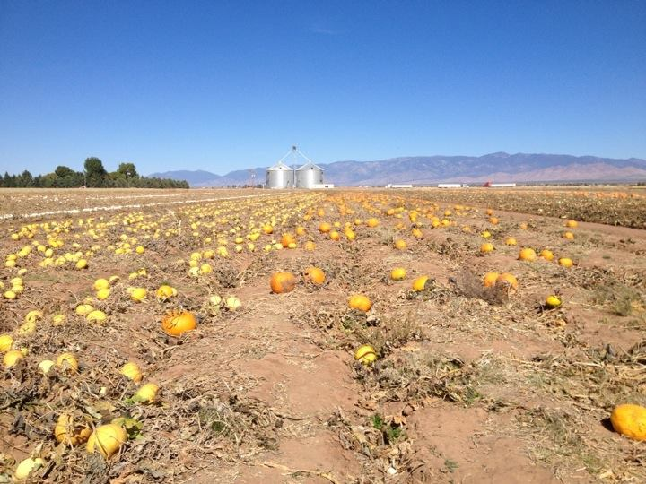 Our visit to a local pumpkin patch! We gotta go every year!
