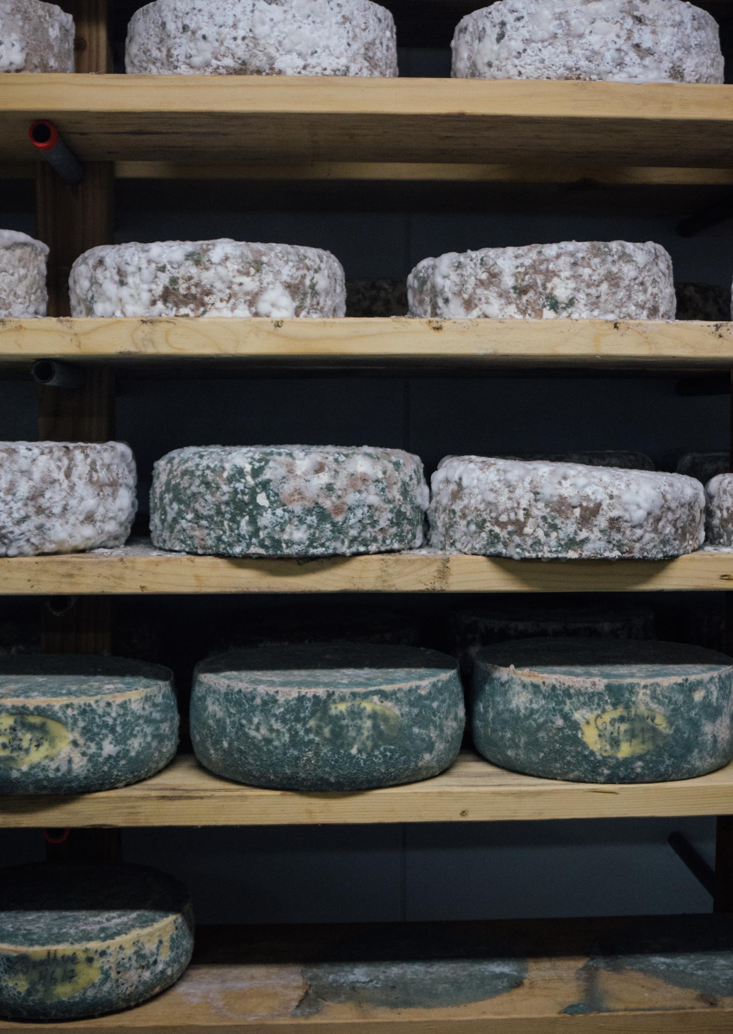 Cheesemaking at Appleton Farms.