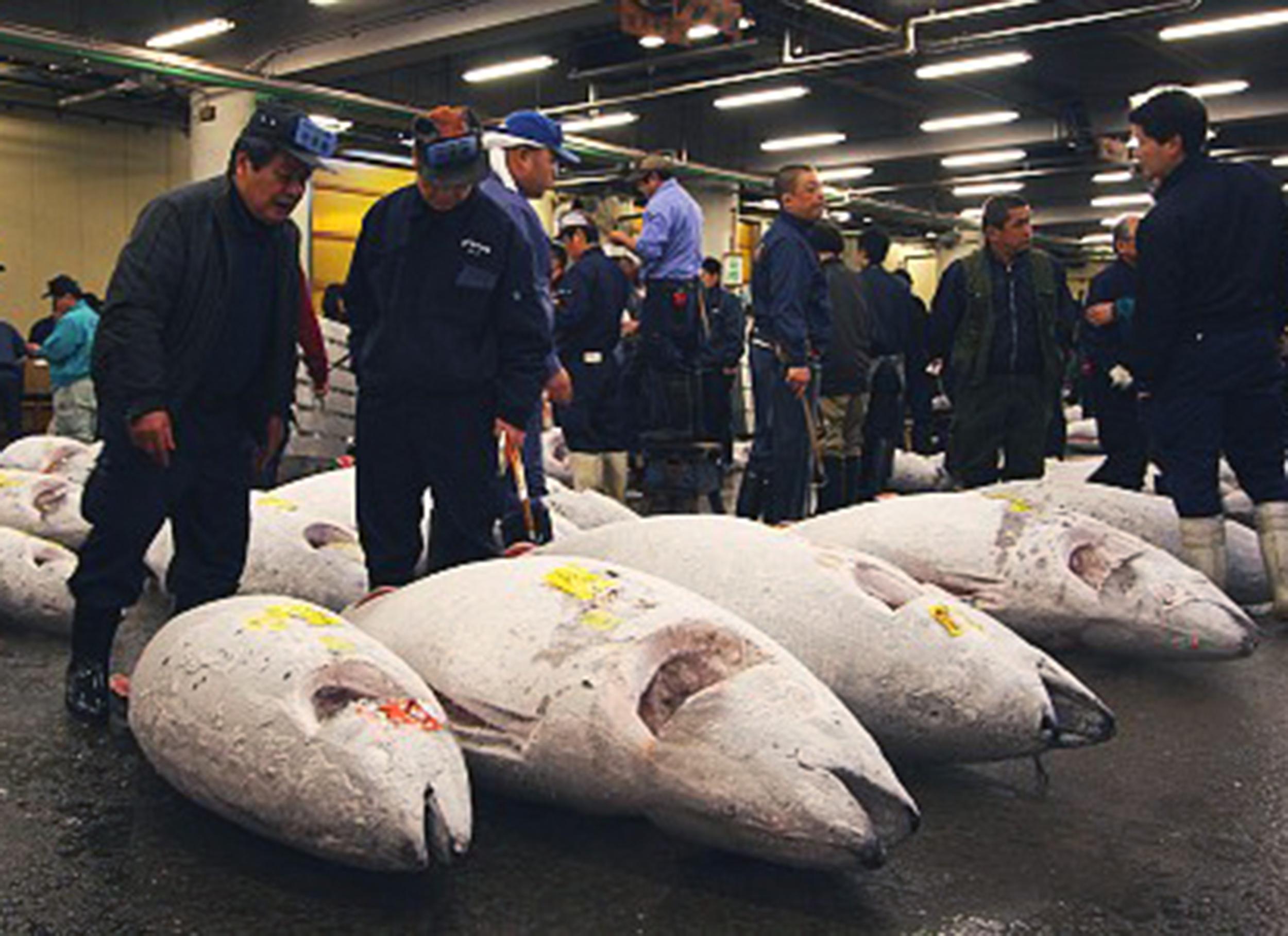 Tsukiji fish market , Tokyo