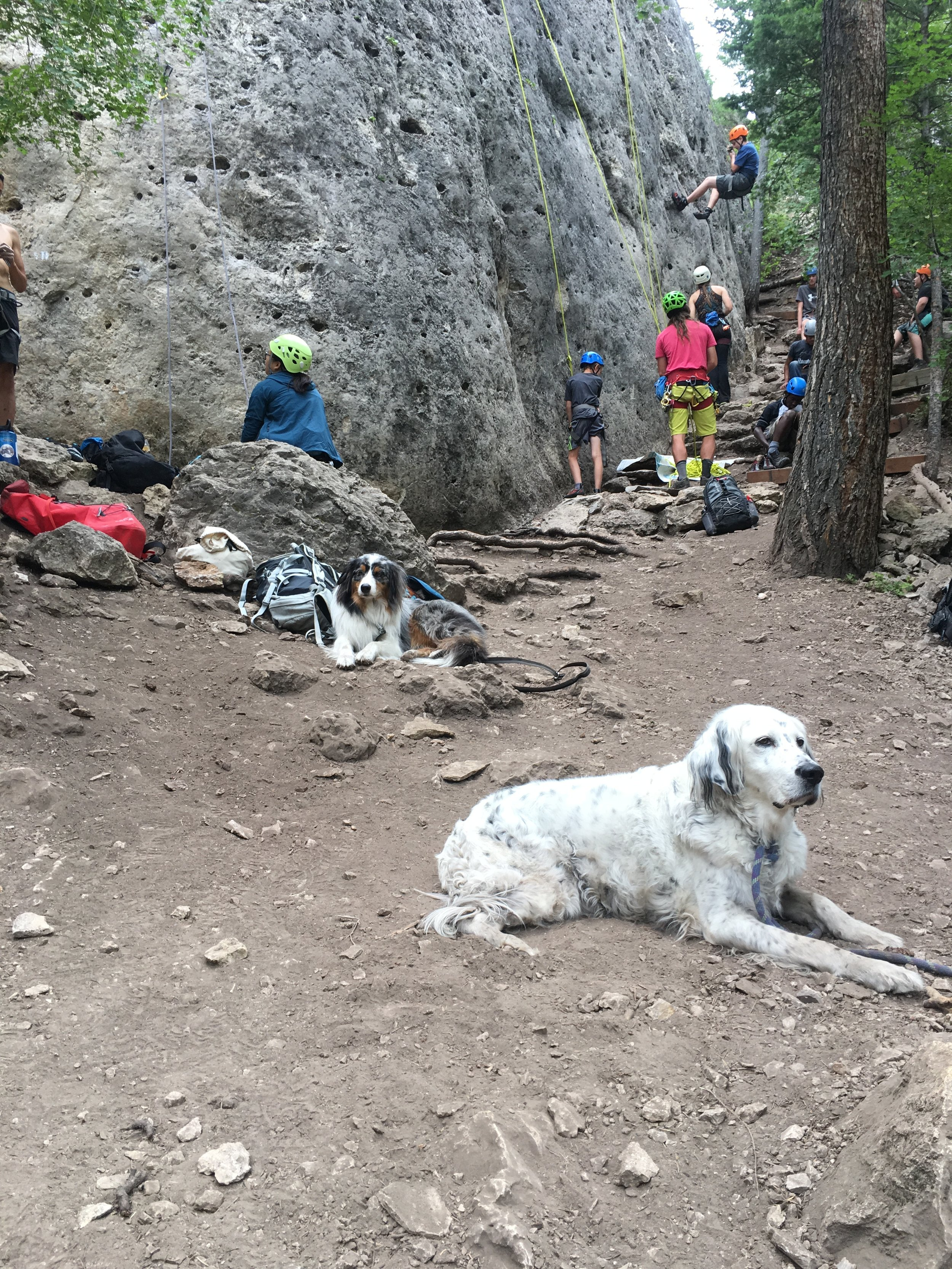 Climbing is always better with crag dogs.