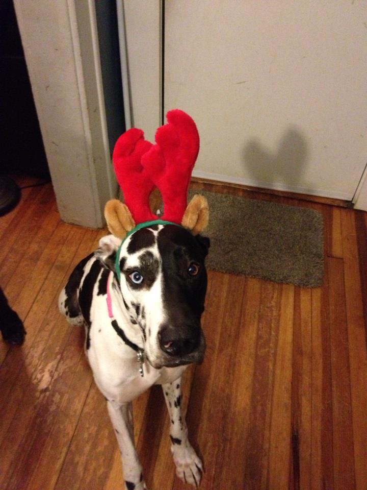 sophie-reindeer.jpg