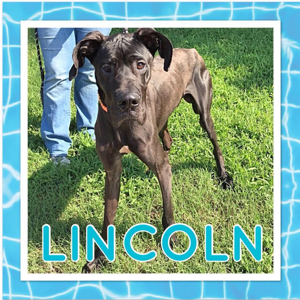 Lincoln5.jpg