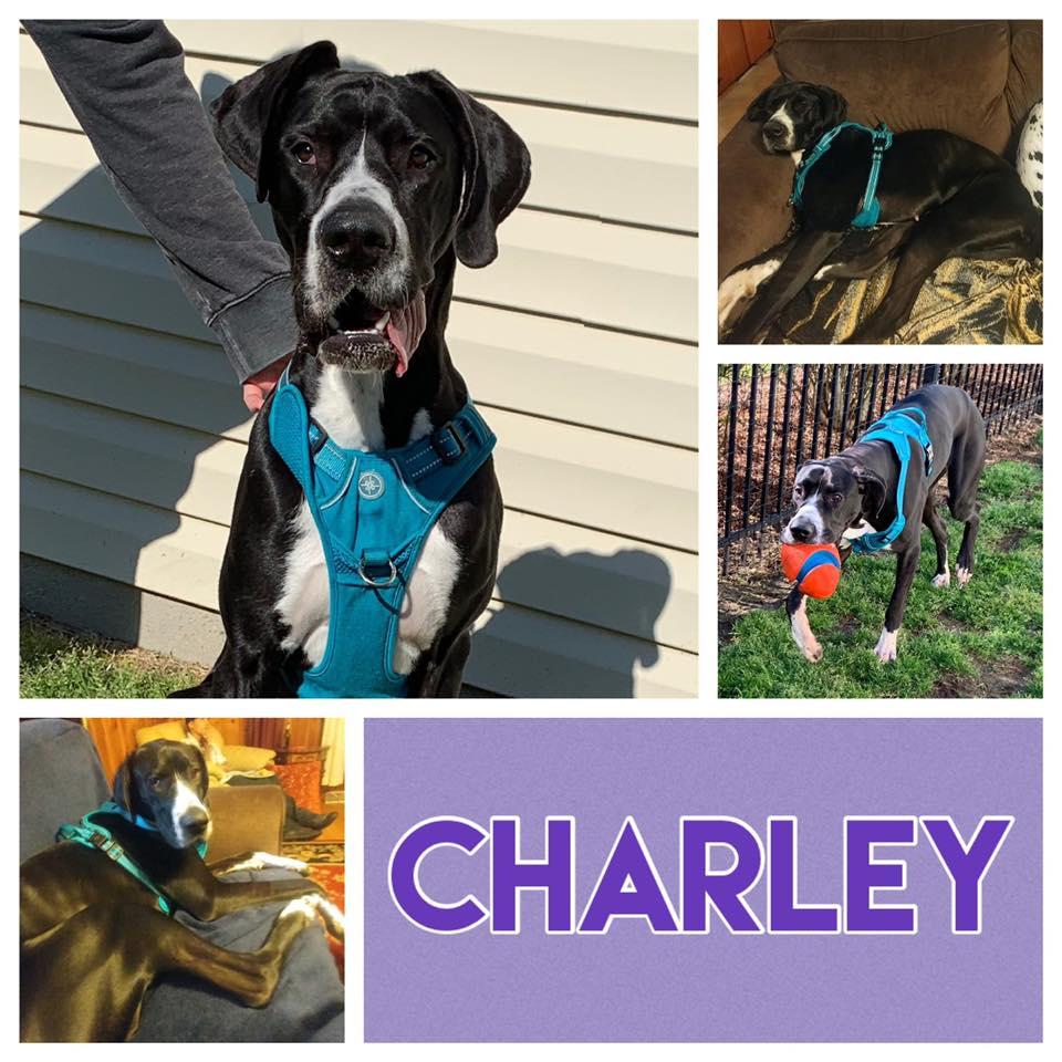 Charley1.jpg