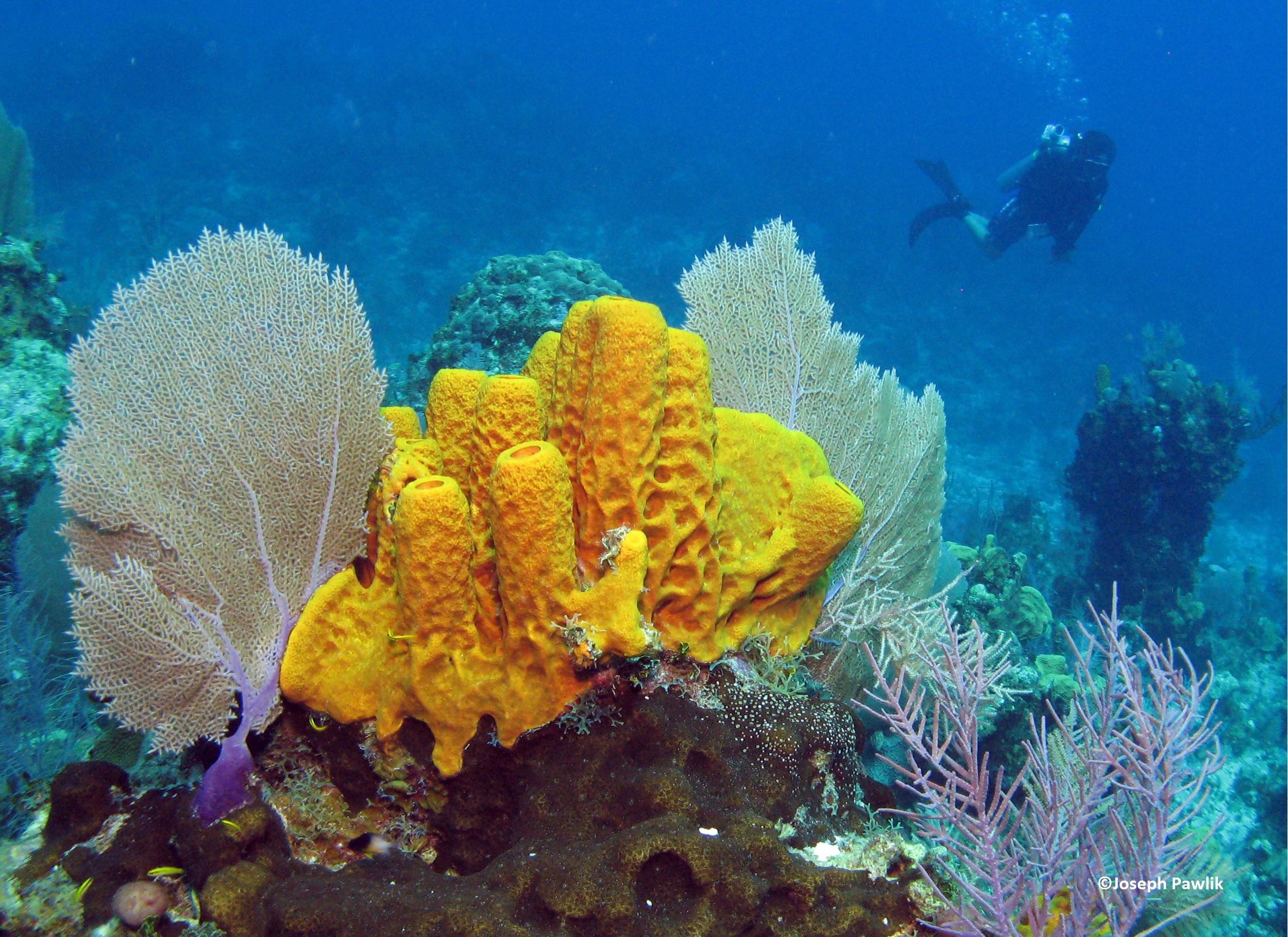 sponge reef scape_PawlikPhoto067_CREDIT.jpg