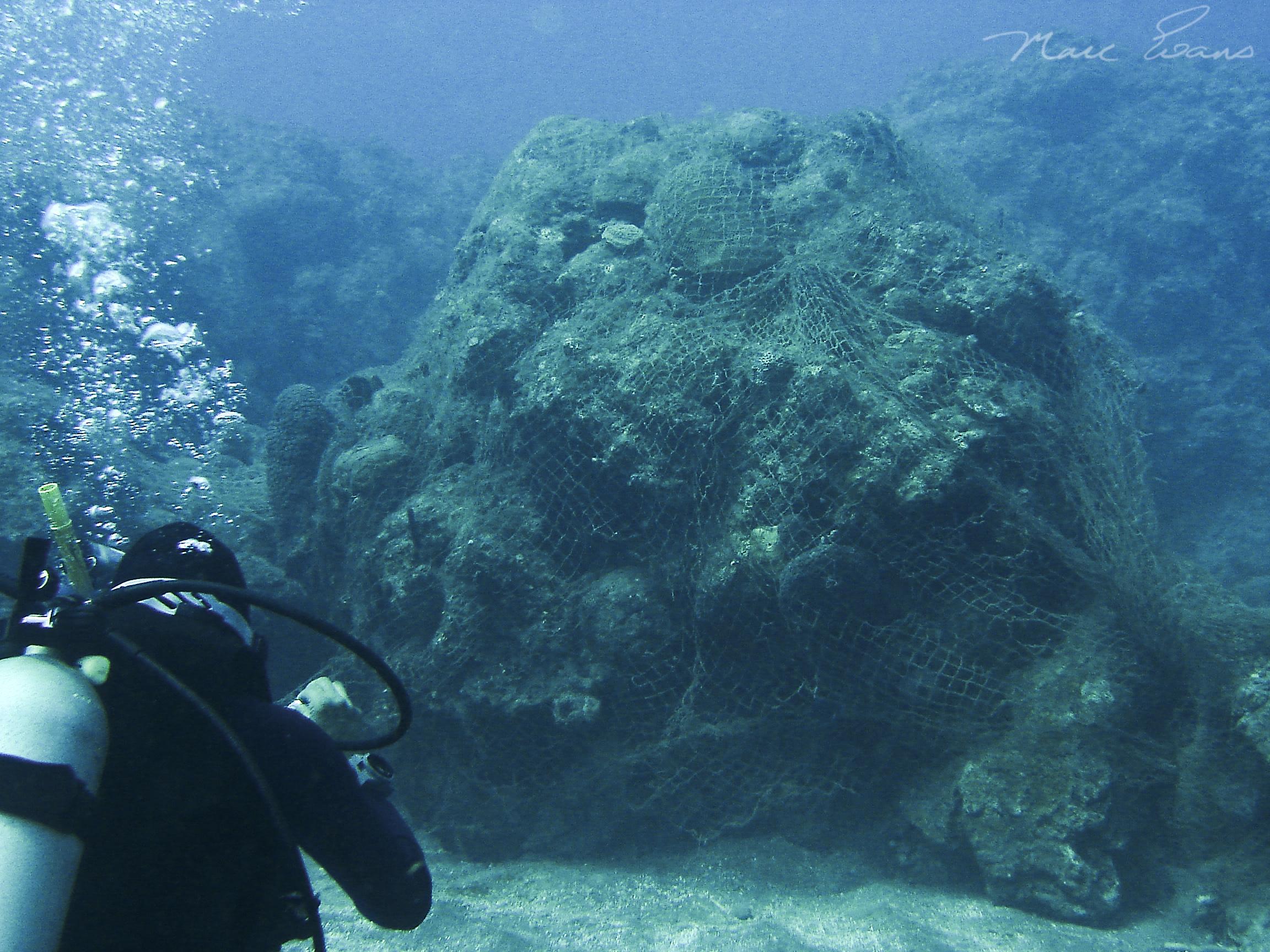 Fishing net over reef_Jamaica_Marc Evans.jpg