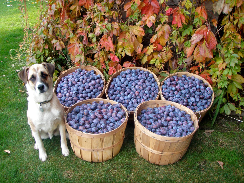 plums snd jackson.jpg