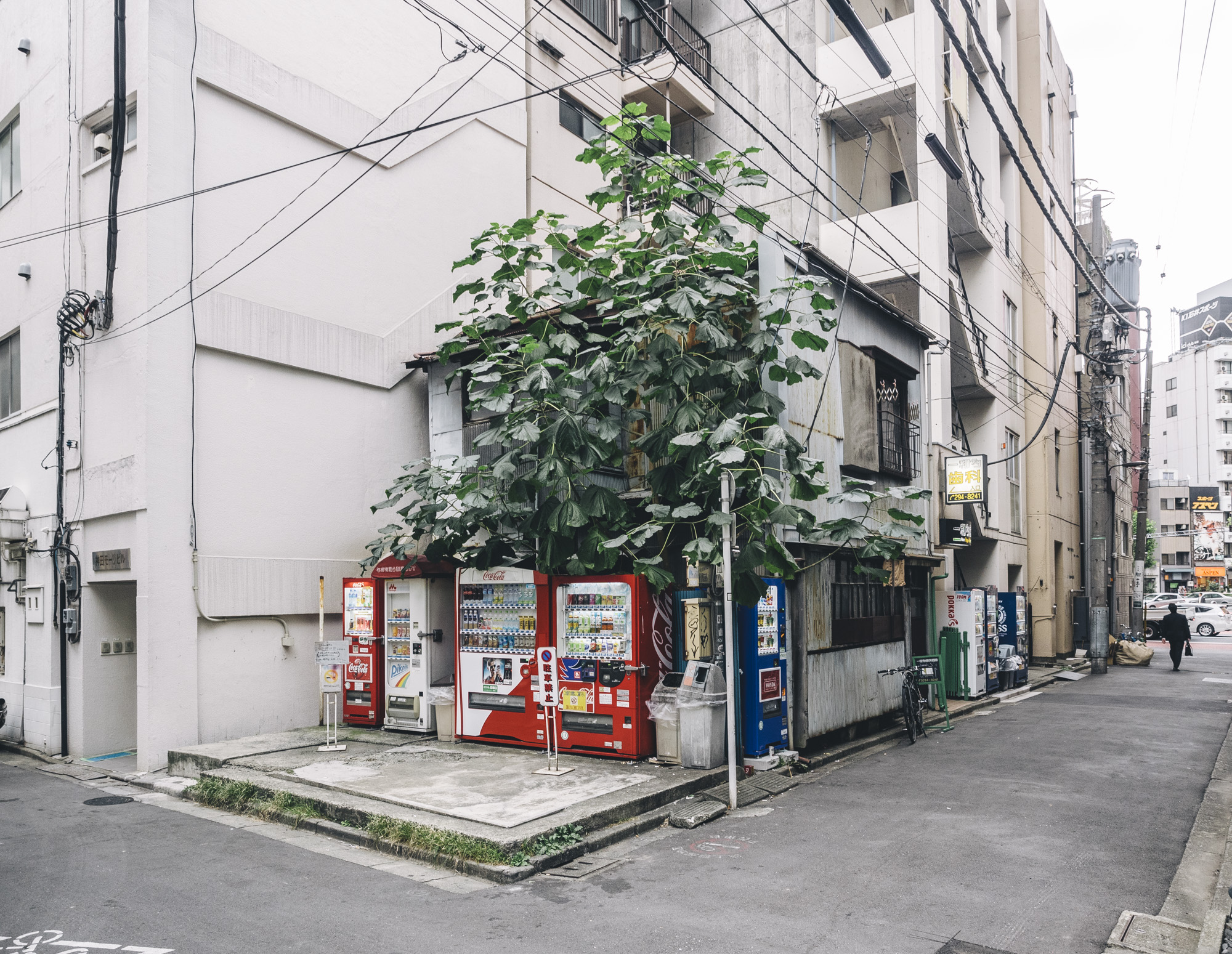 Japan2014_a200749.jpg