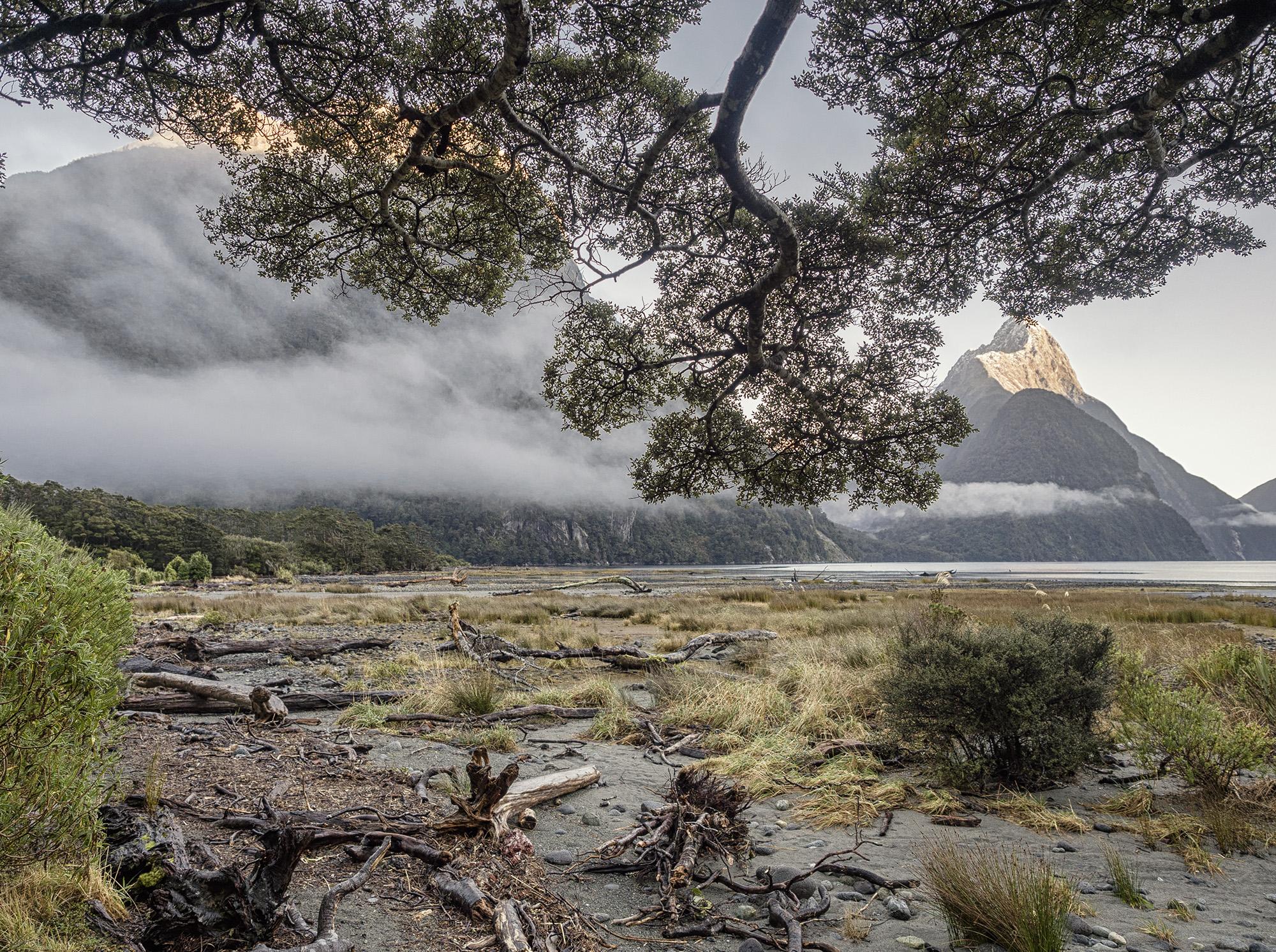 NZ_5190391.jpg