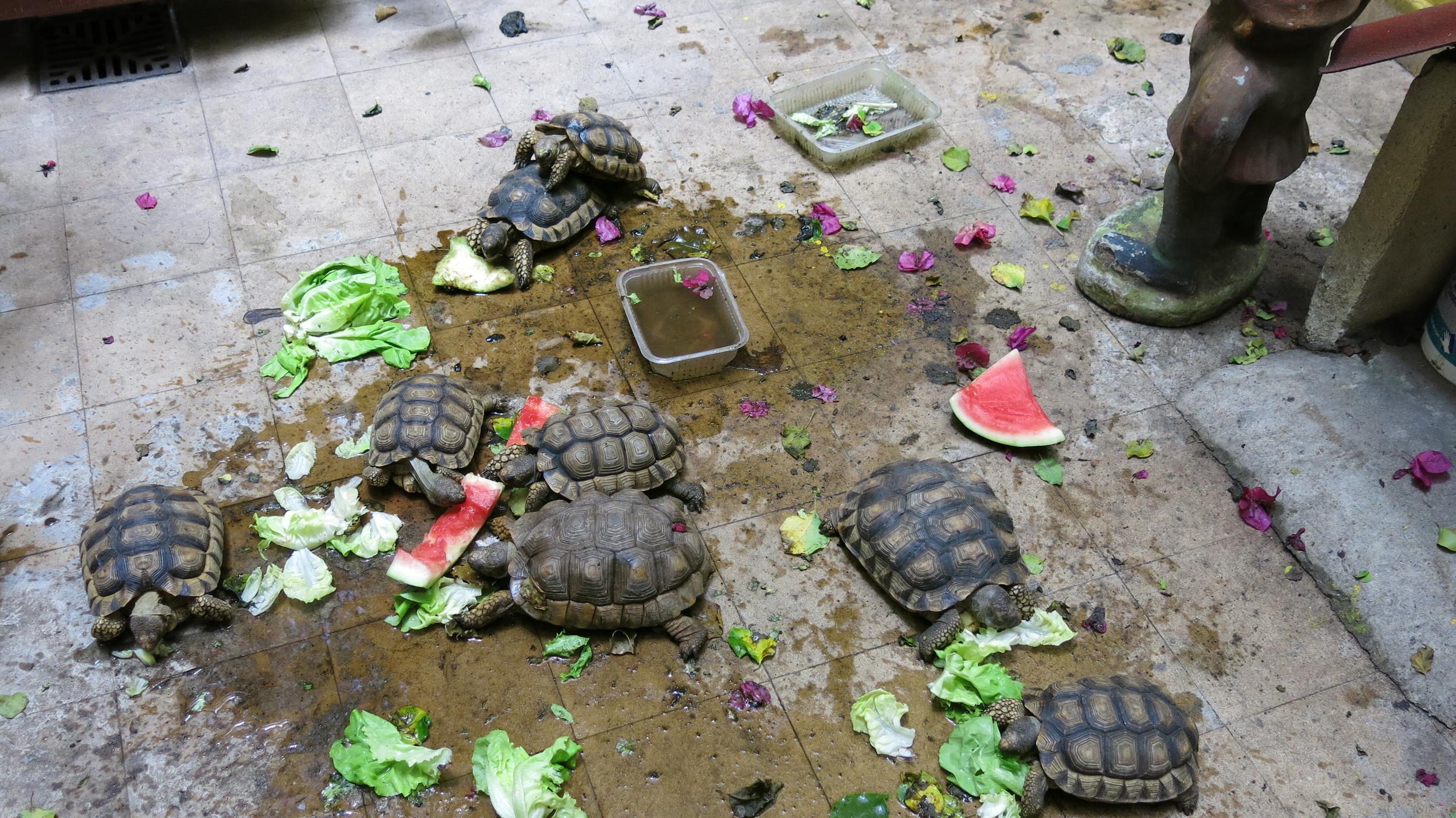Turtles caught on iPhone at Mirta's Studio.