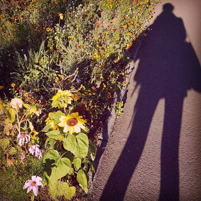 You may not be able to see it, but roadside flowers bring a smile to the face of my looooooooong shadow.