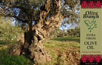 click the picture to purchase Palestinian olive oil for playgrounds for palestine