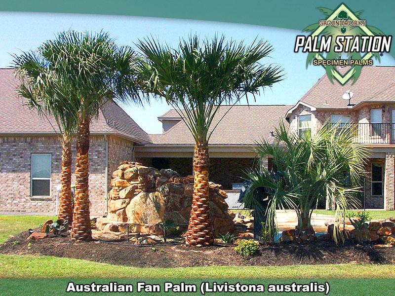Australian_Large_W.jpg