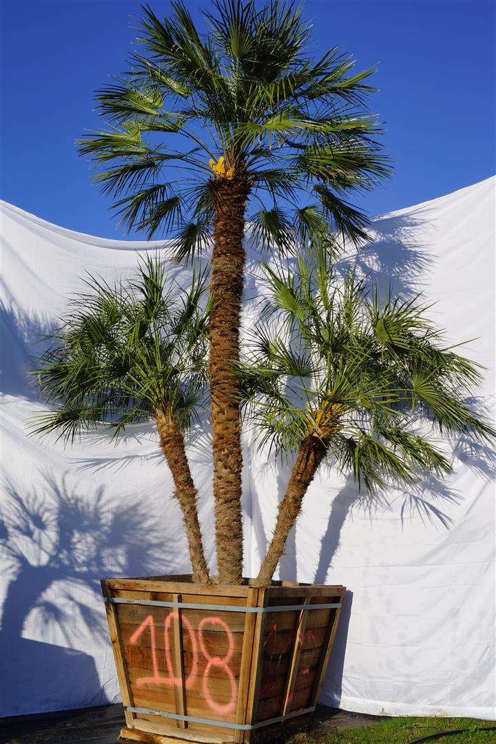 Palm Number: 108