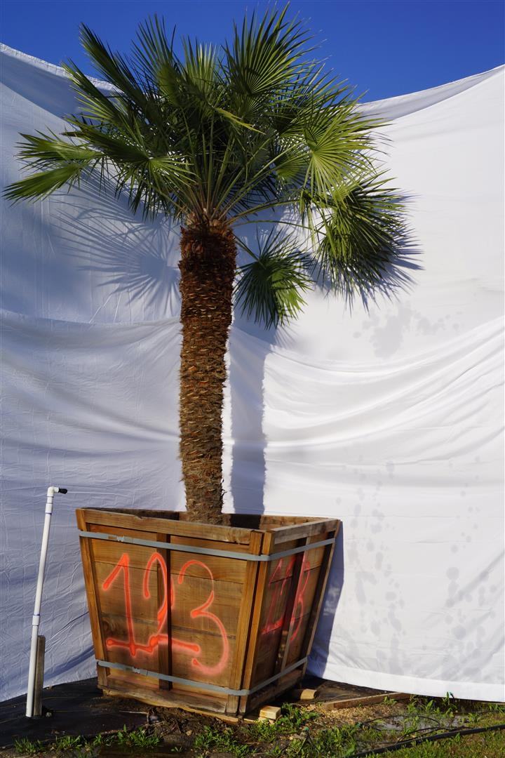 Palm Number: 123