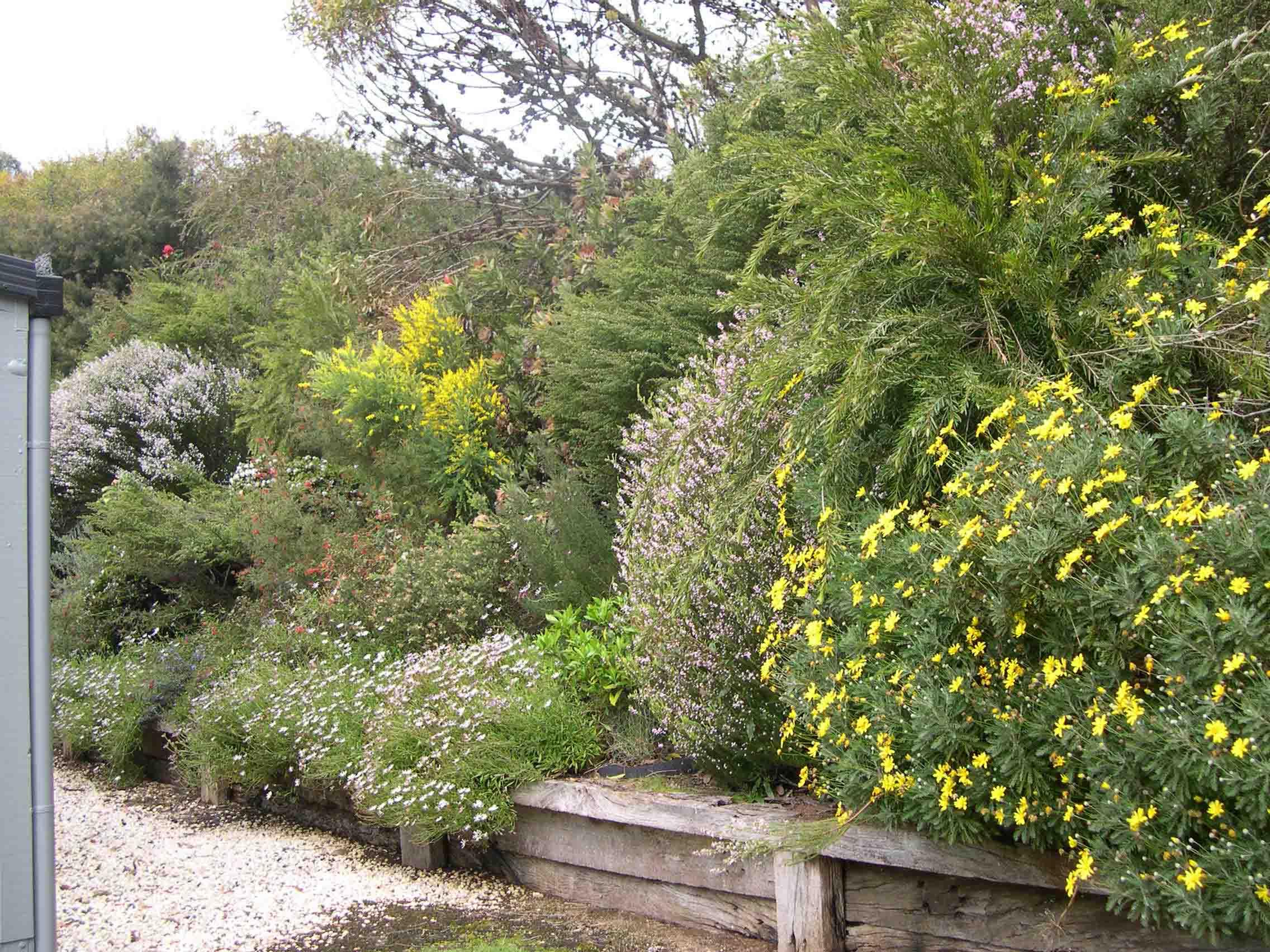 Grand Ridge - flowers in spring 2.jpg