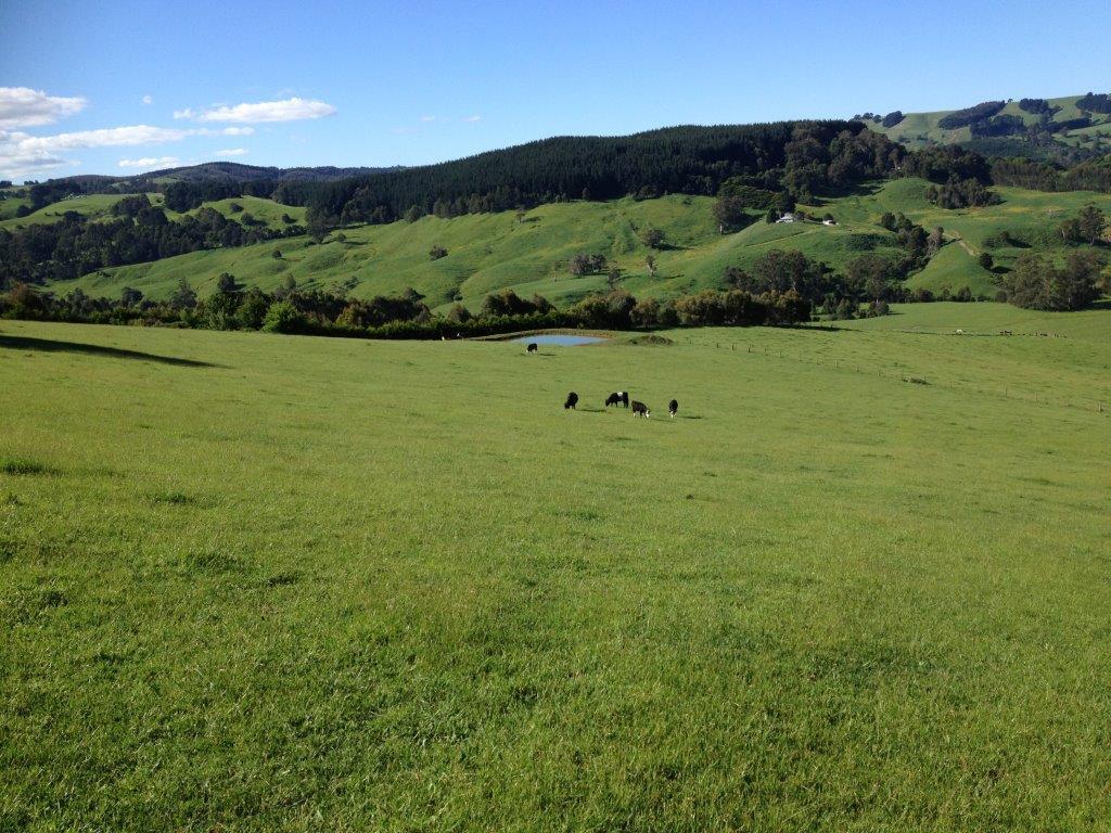 Grand Ridge pasture & Tarwin Valley in late spring... (1).jpg