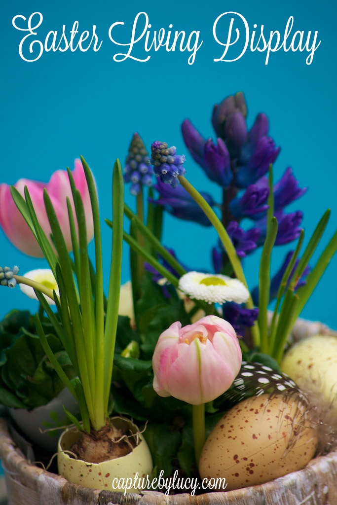 Living-Easter-Display-2.jpg
