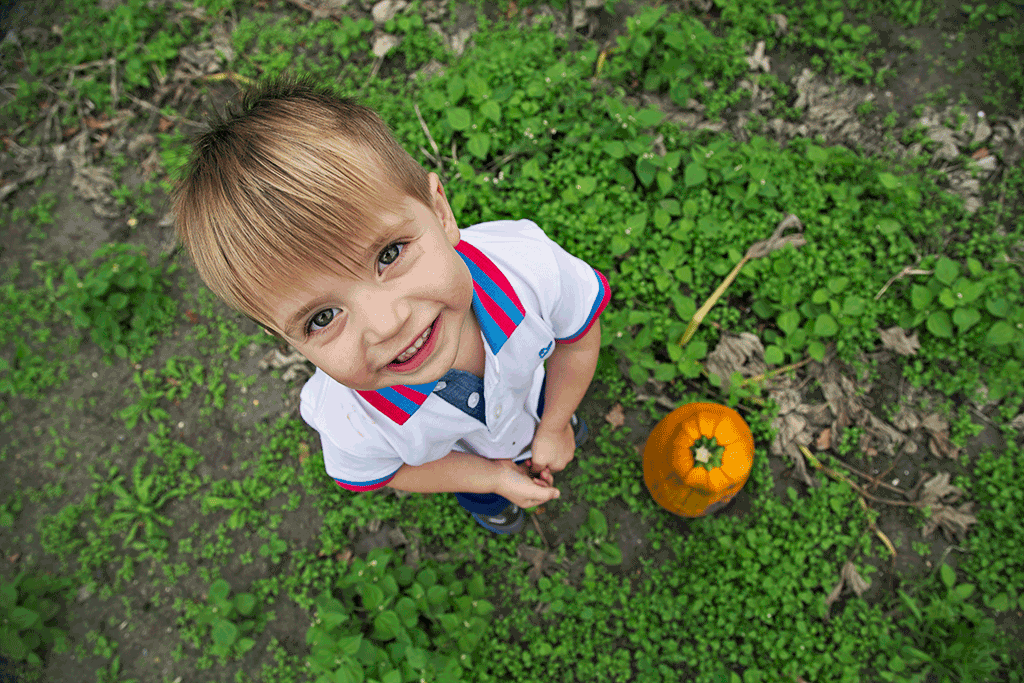 pumpkin-patch.png